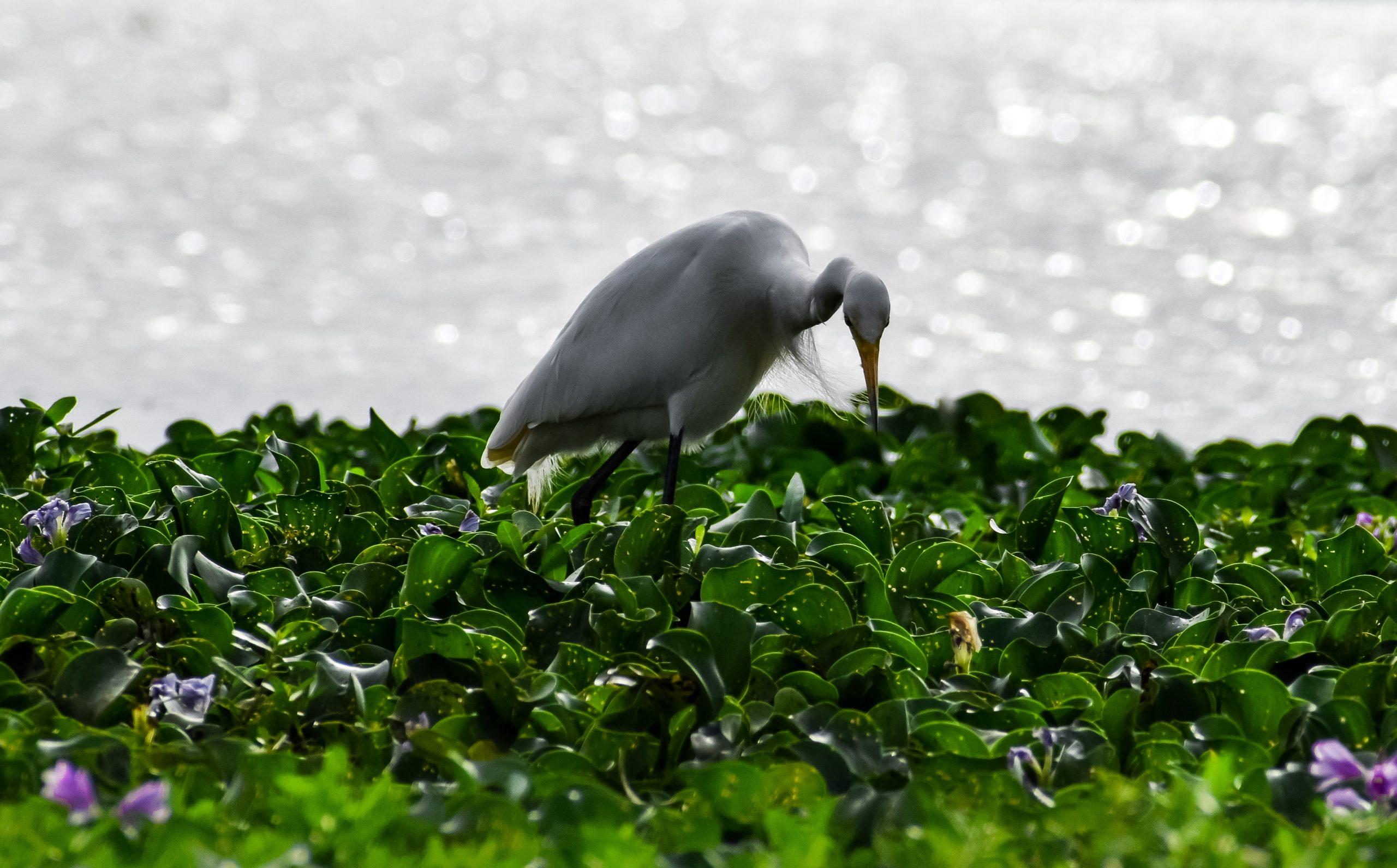 bird on the lake side