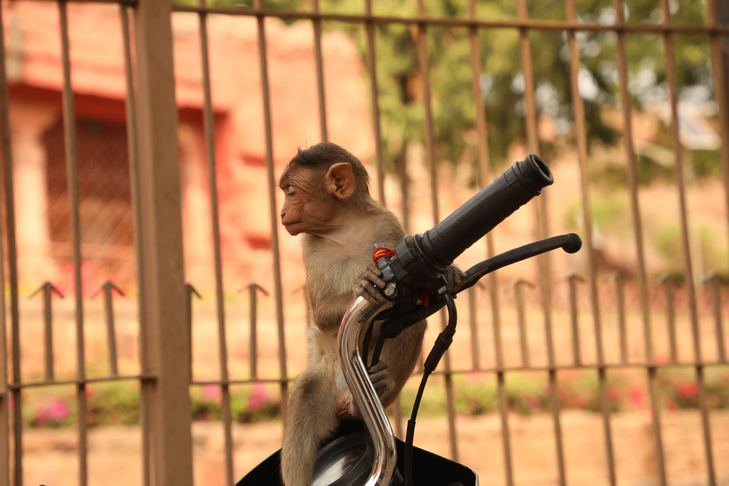 monkey sitting on a bike