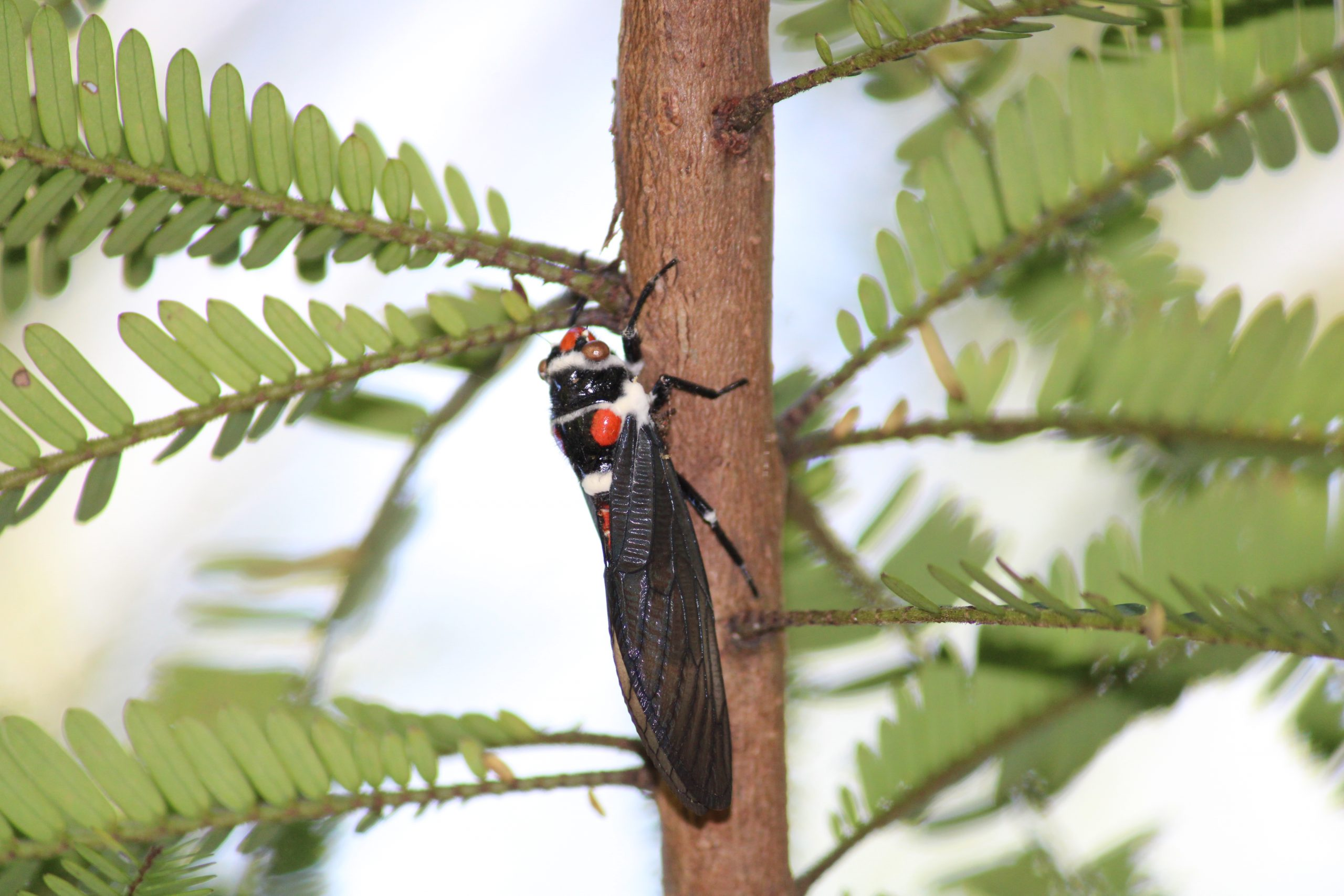 insect on a tree
