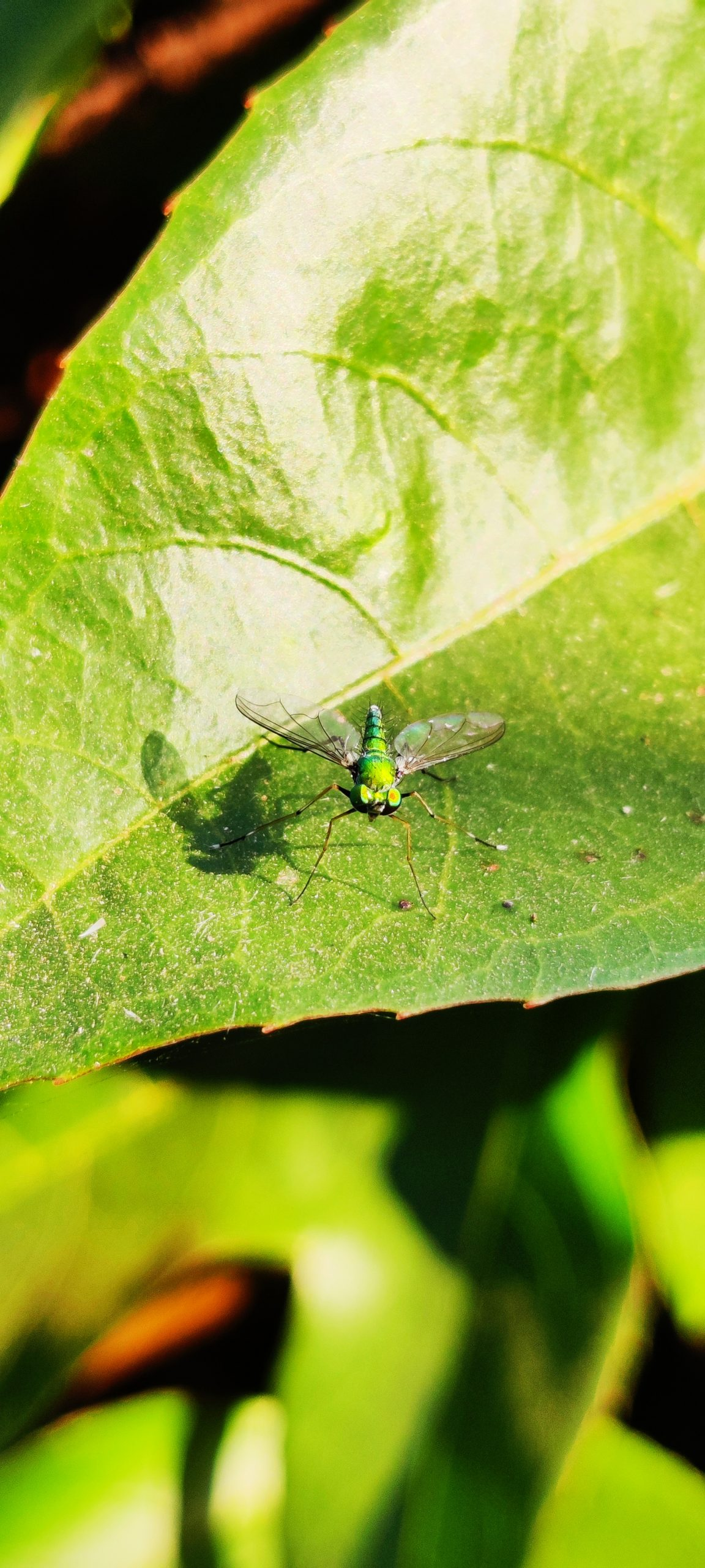 An insect on leaf