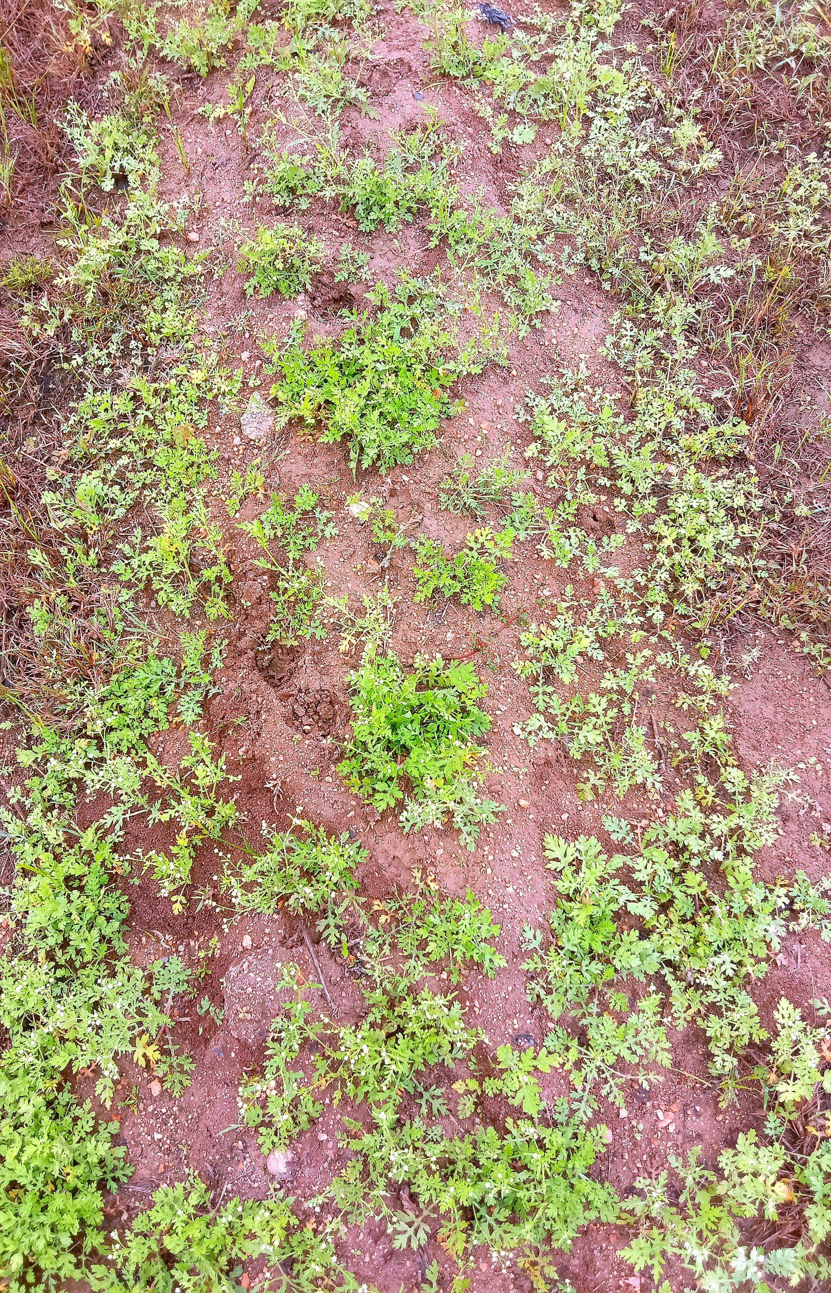 Congress grass on a surface