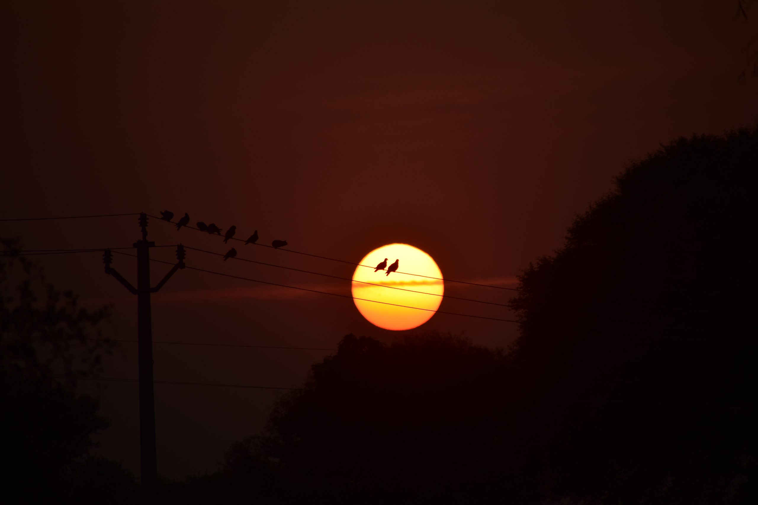 birds on an electric line at sunset