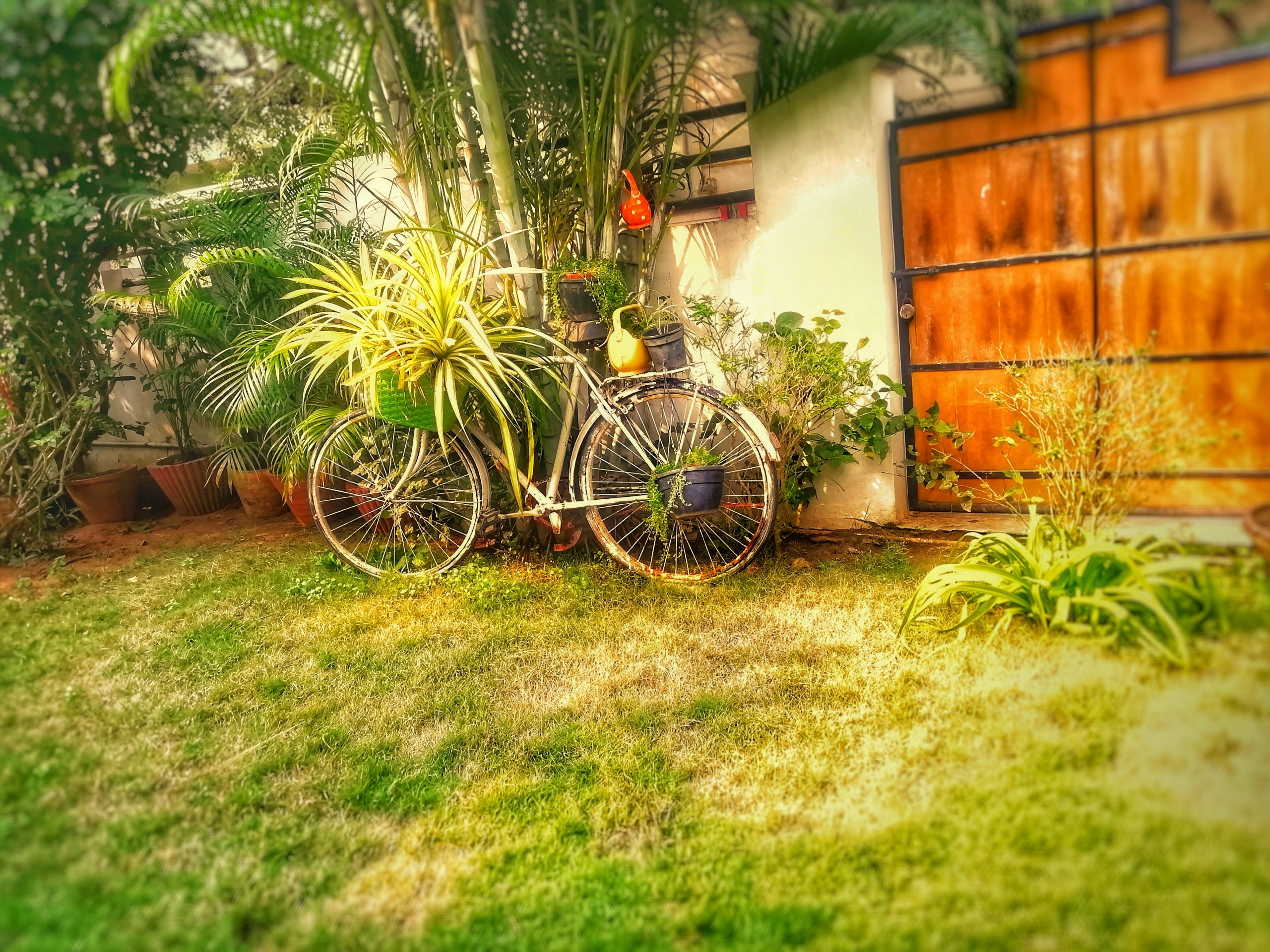 A bicycle in house garden