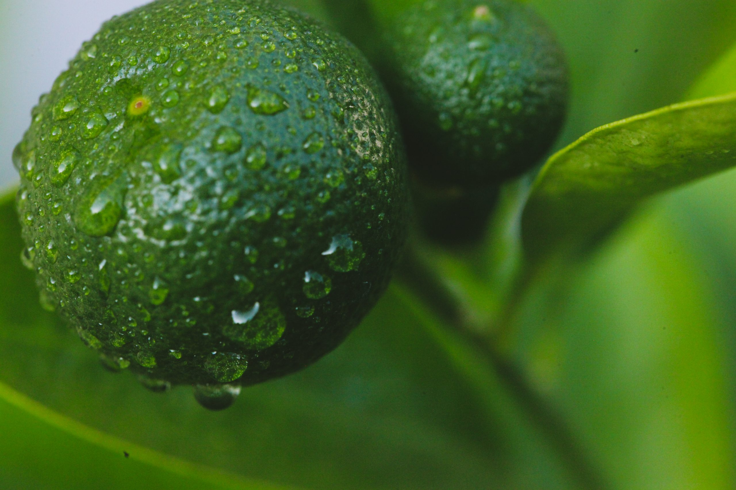 Water drops on oranges