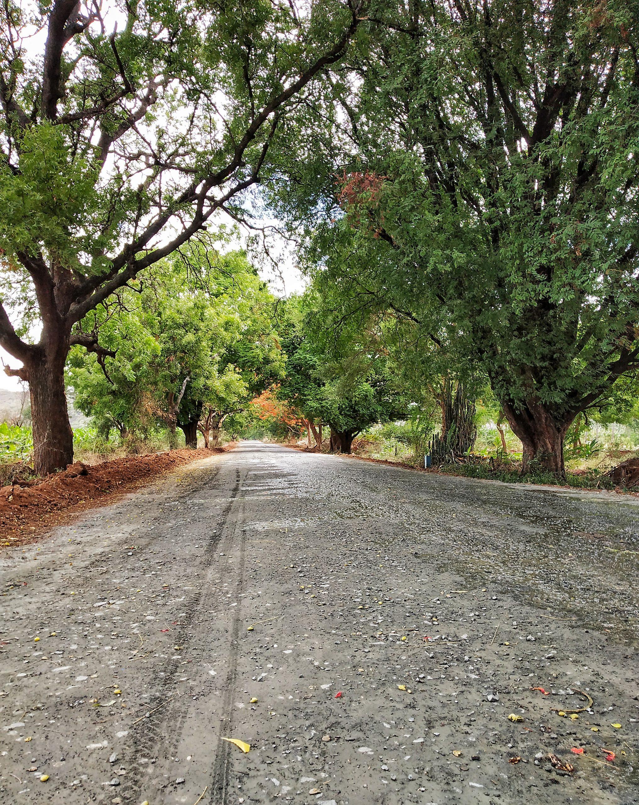 trees around road