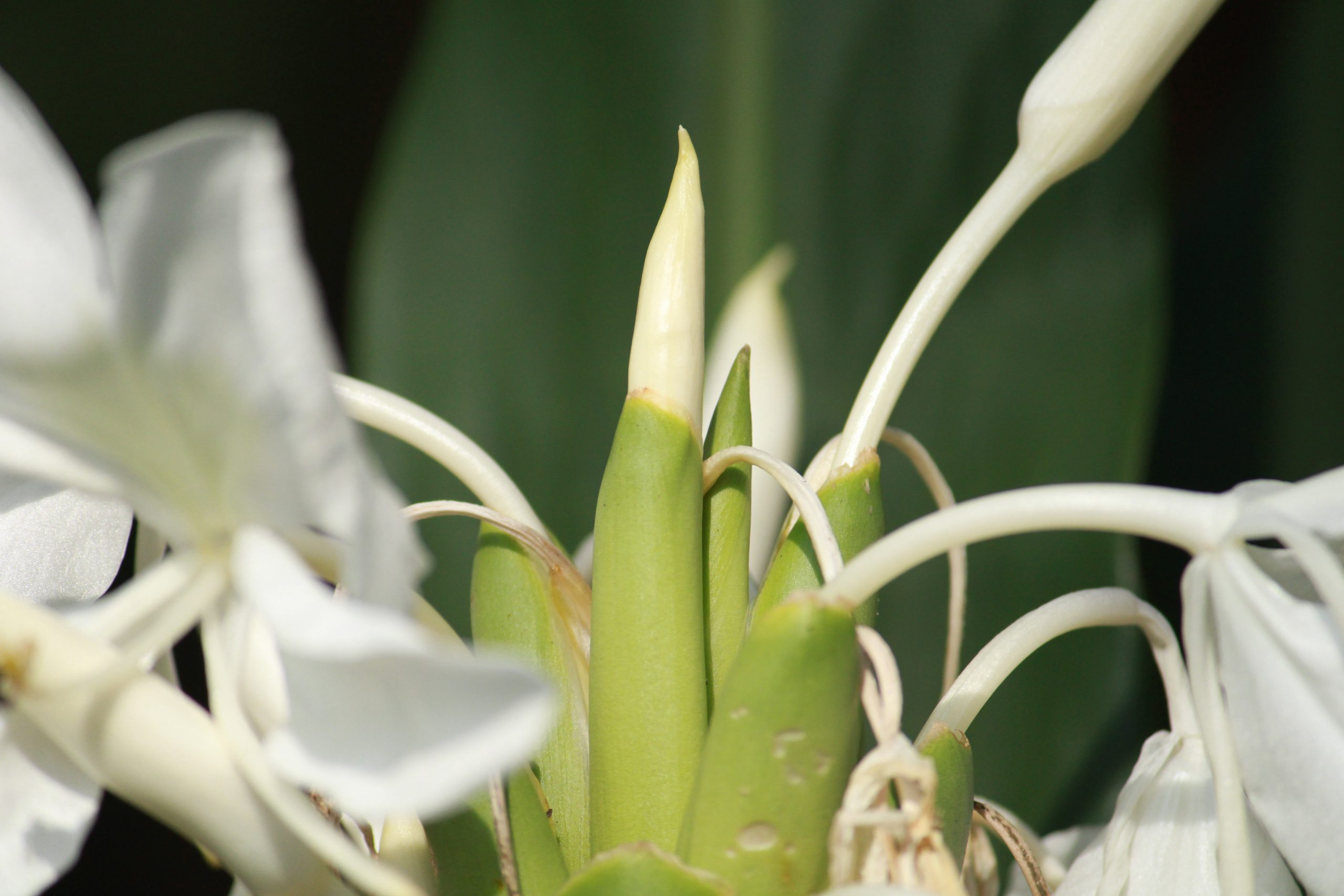 close-up of a bud