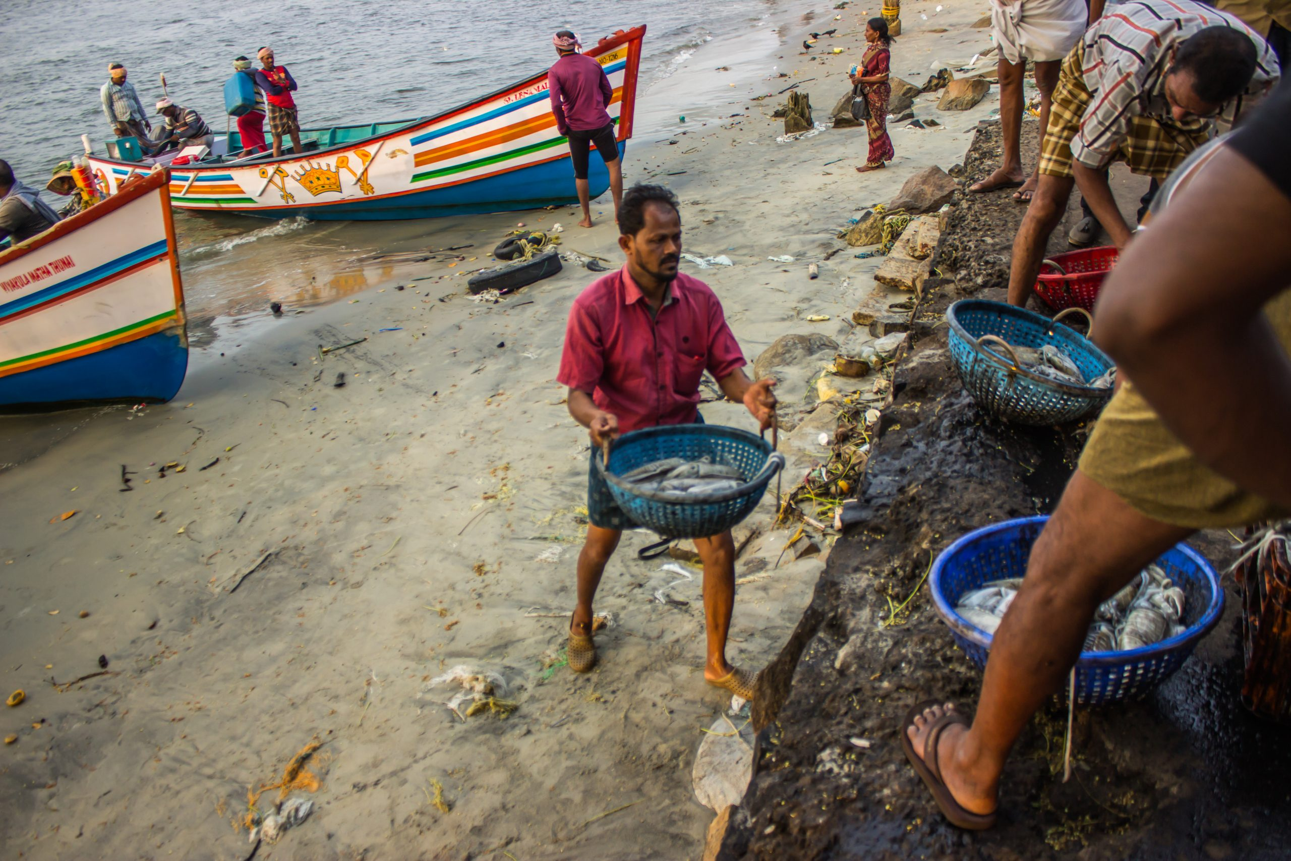 Fishermen collecting fish in baskets