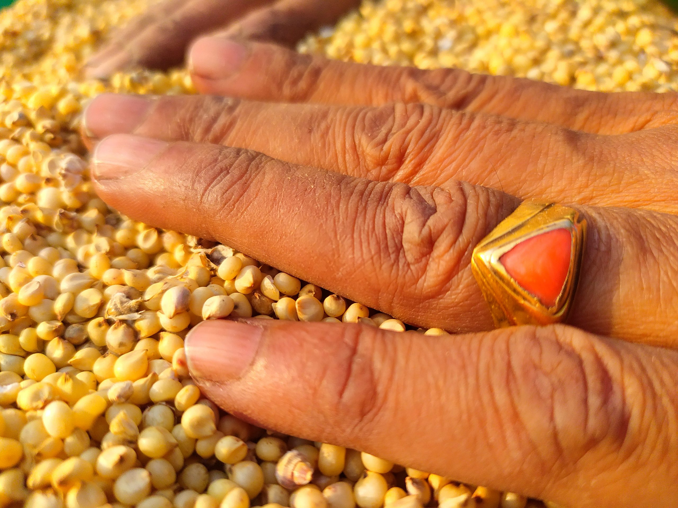 hand on grains