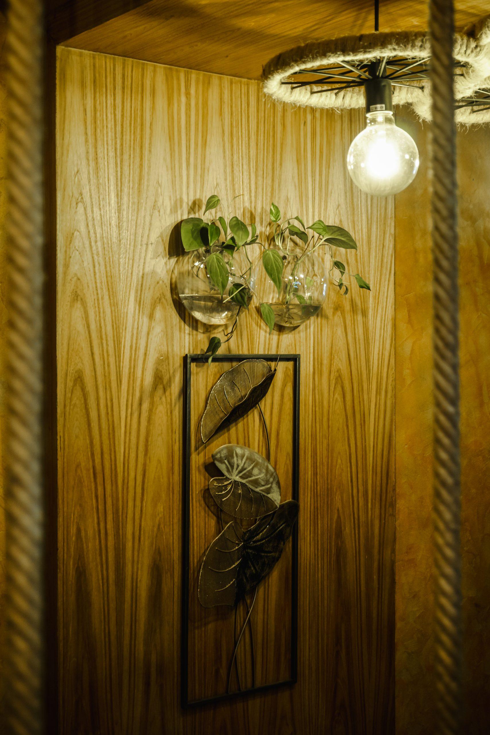 Houseplants decoration
