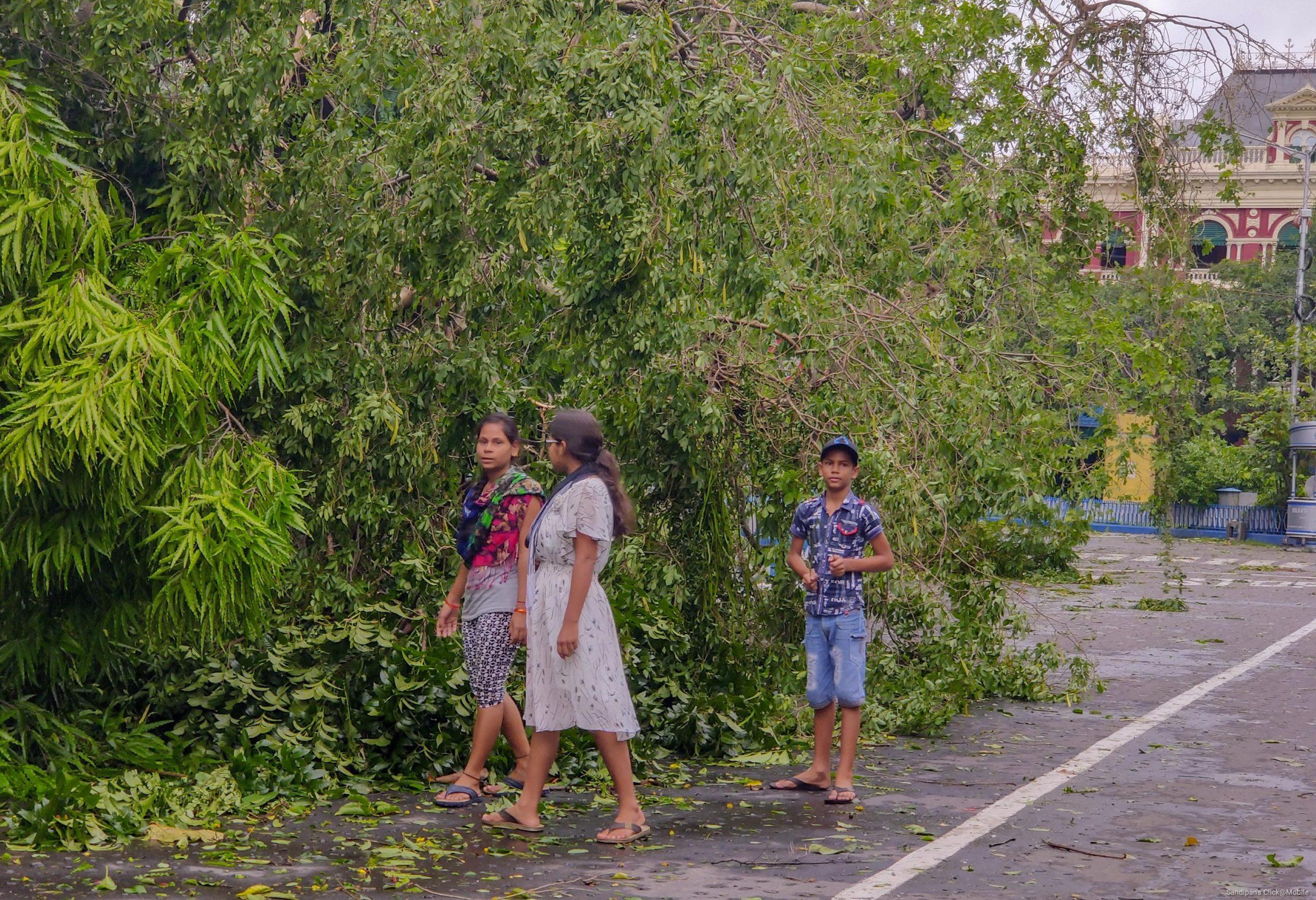 Kids near a fallen tree