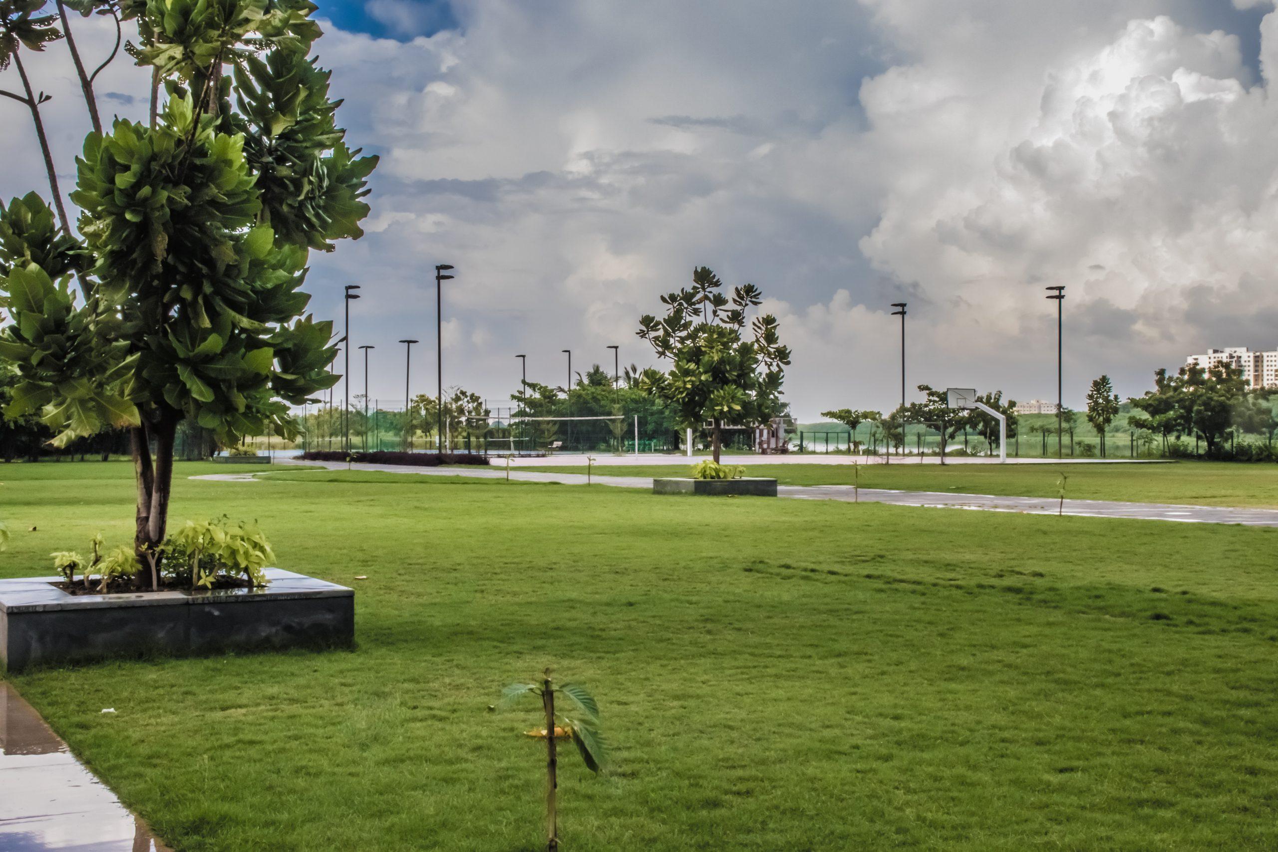 Lawn of a public park