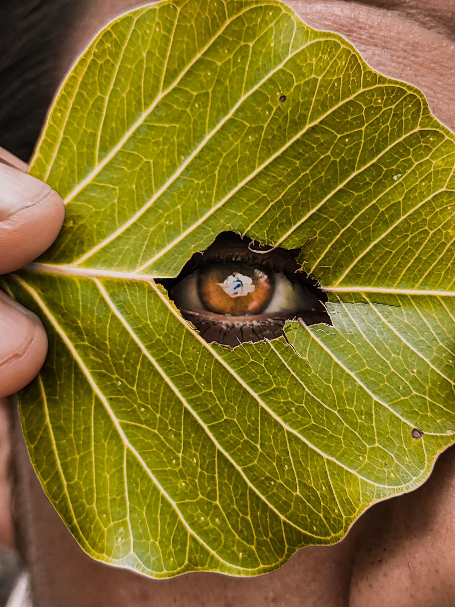 Leaf and eye