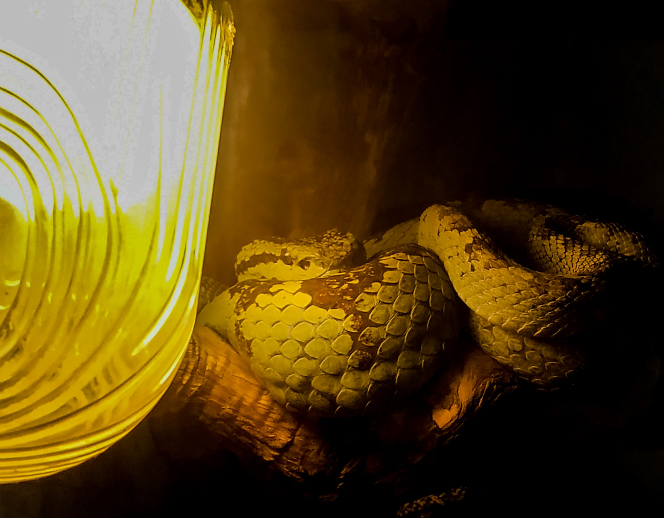 A snake in low light