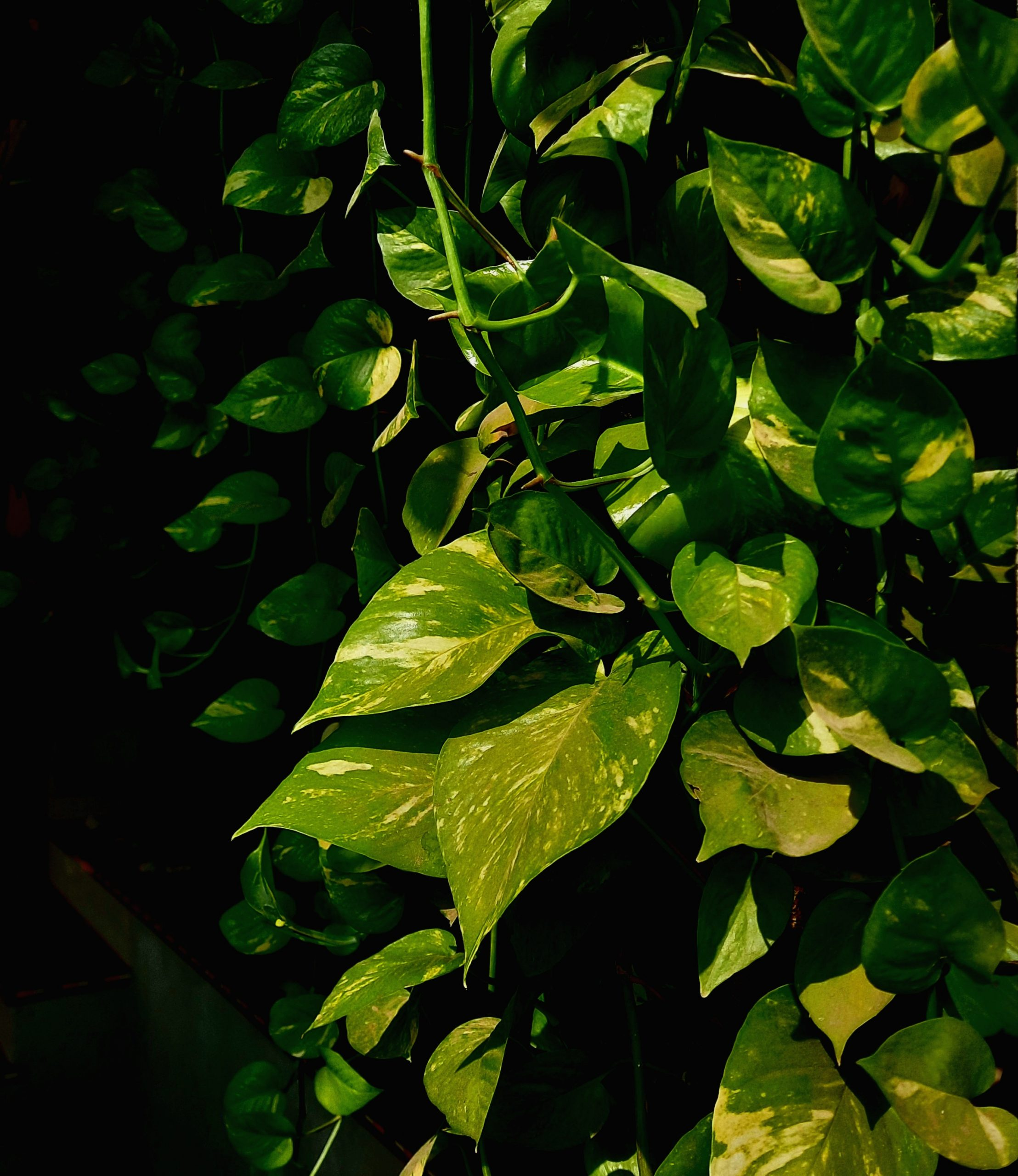 sunlight on plant