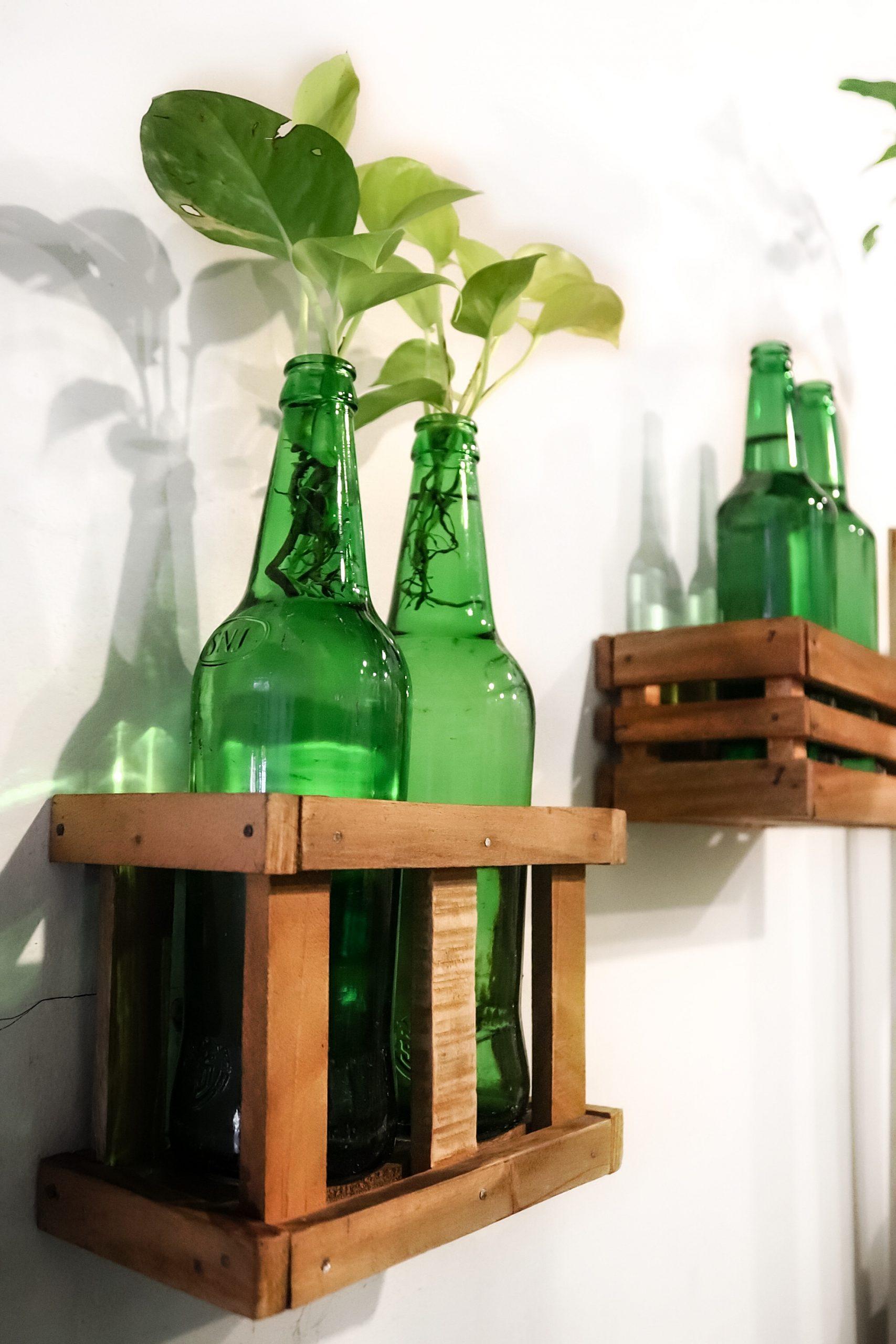 plants in a bottle