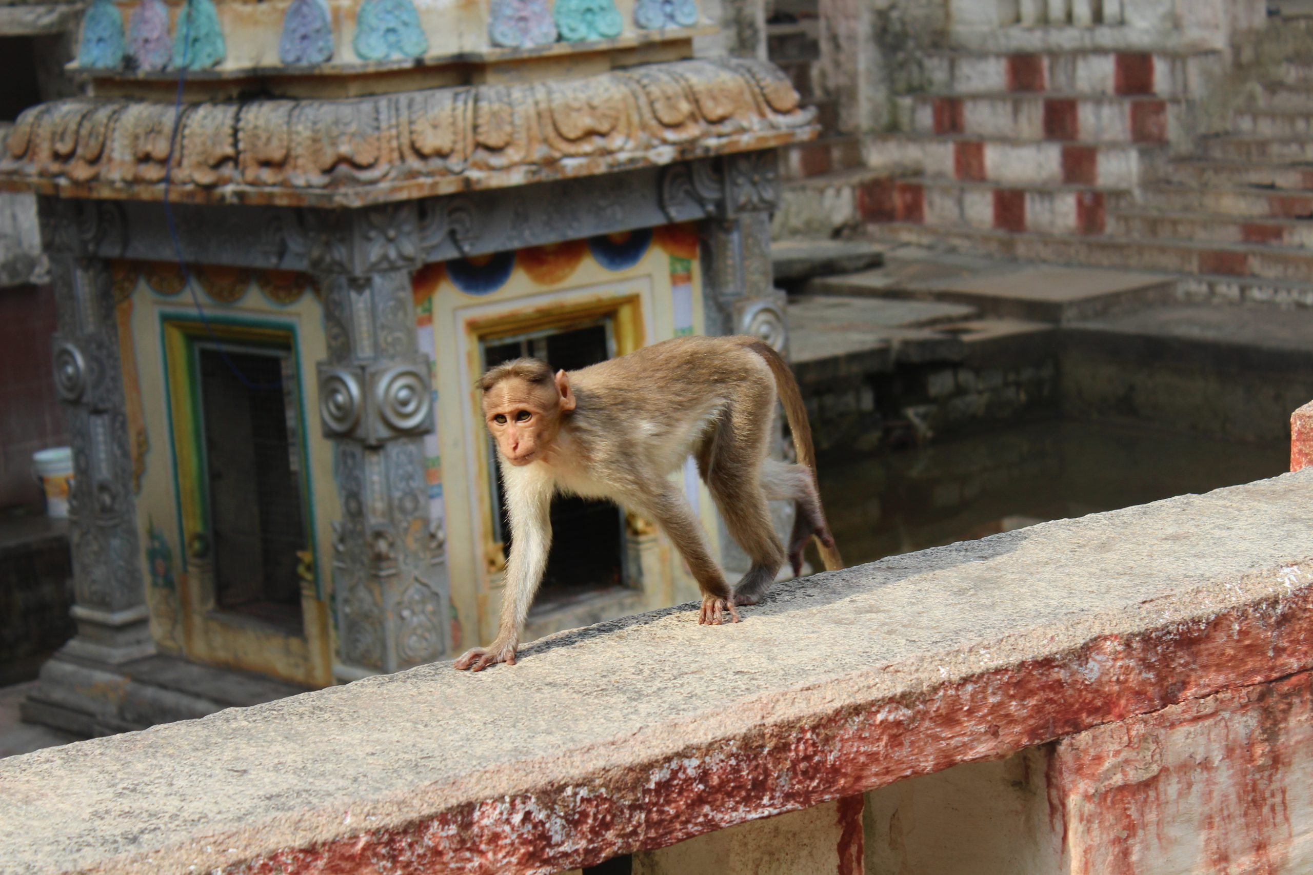 monkey on a wall