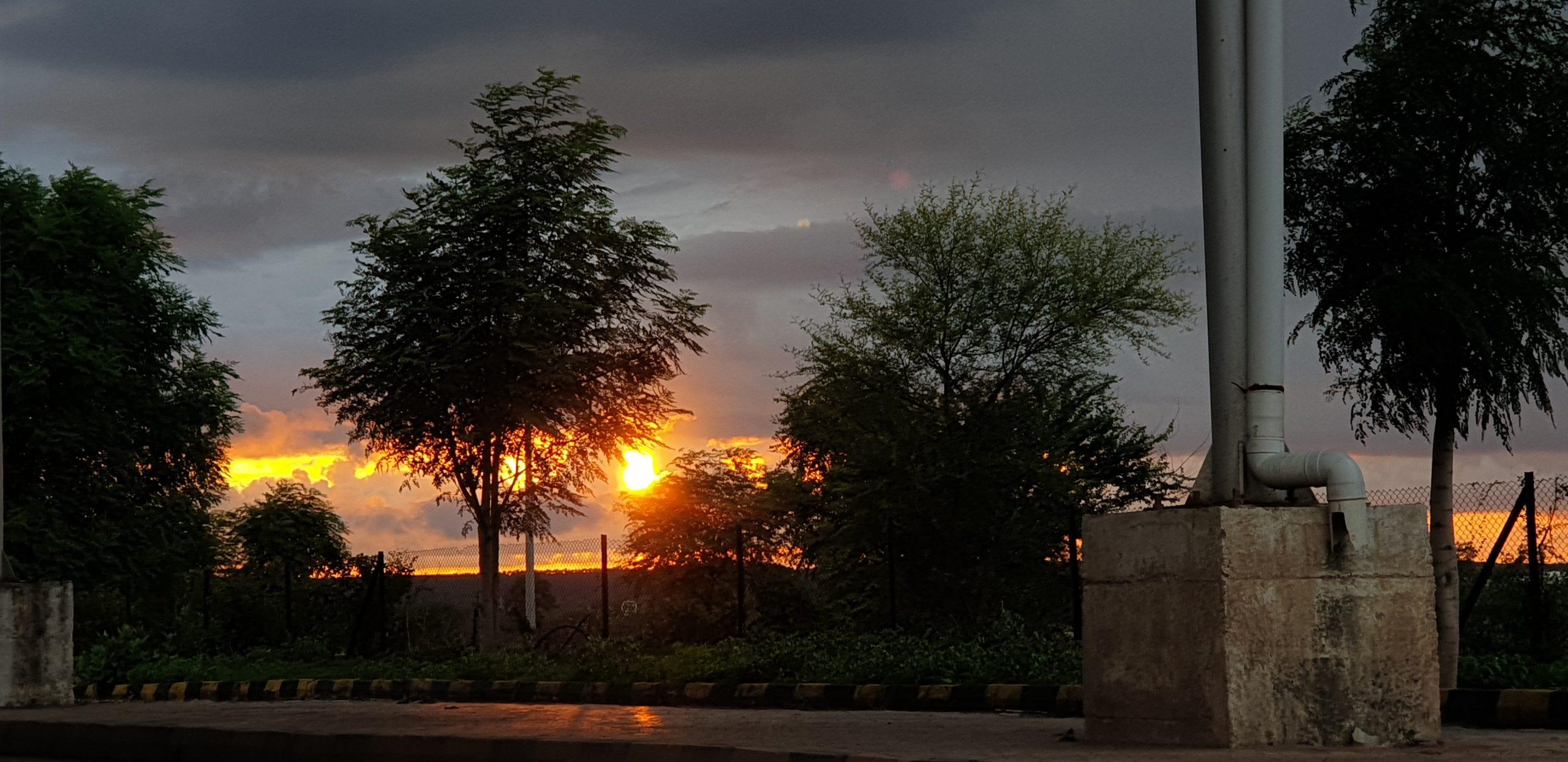 the rising sun amid trees