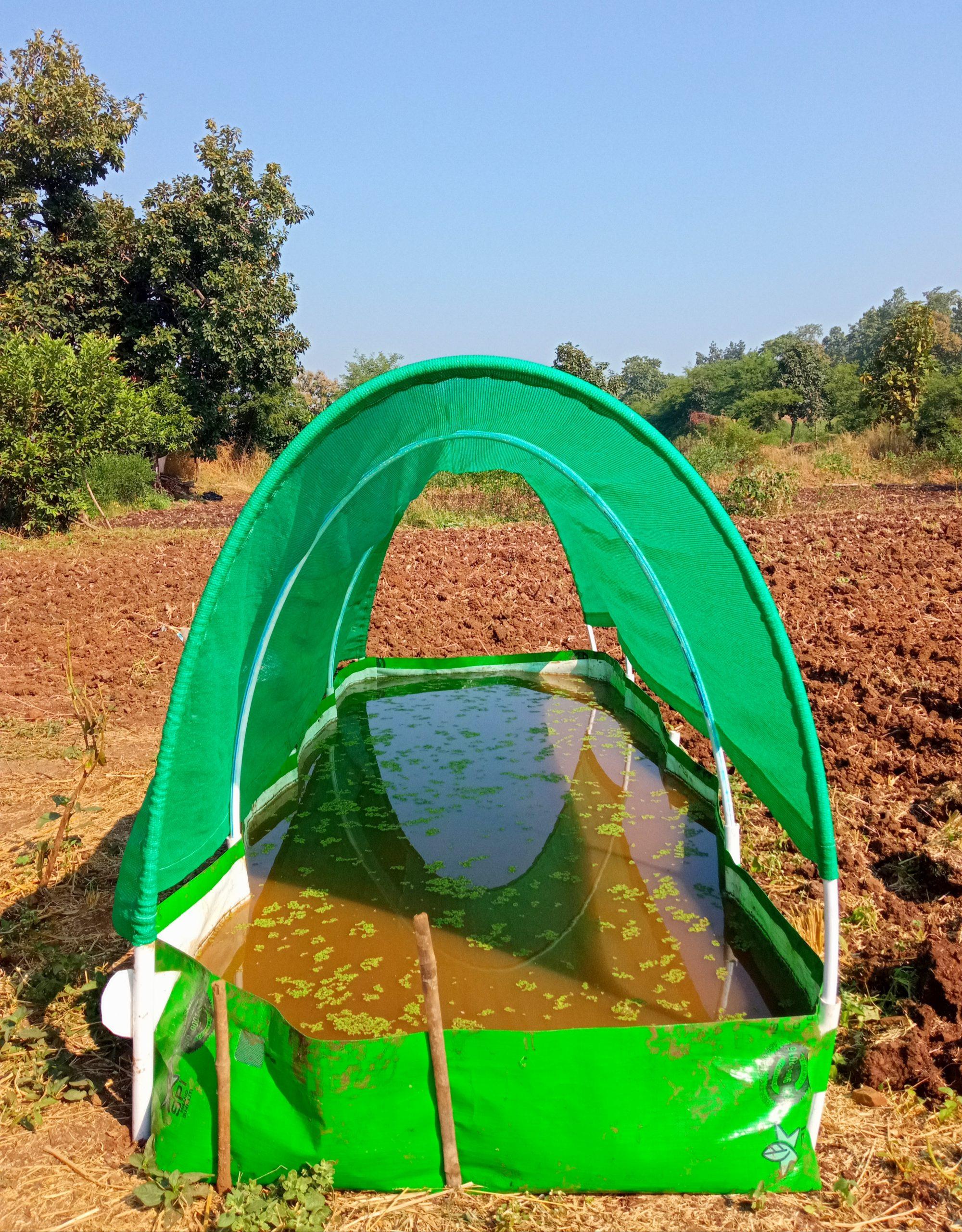 Organic fertilizer under a tent
