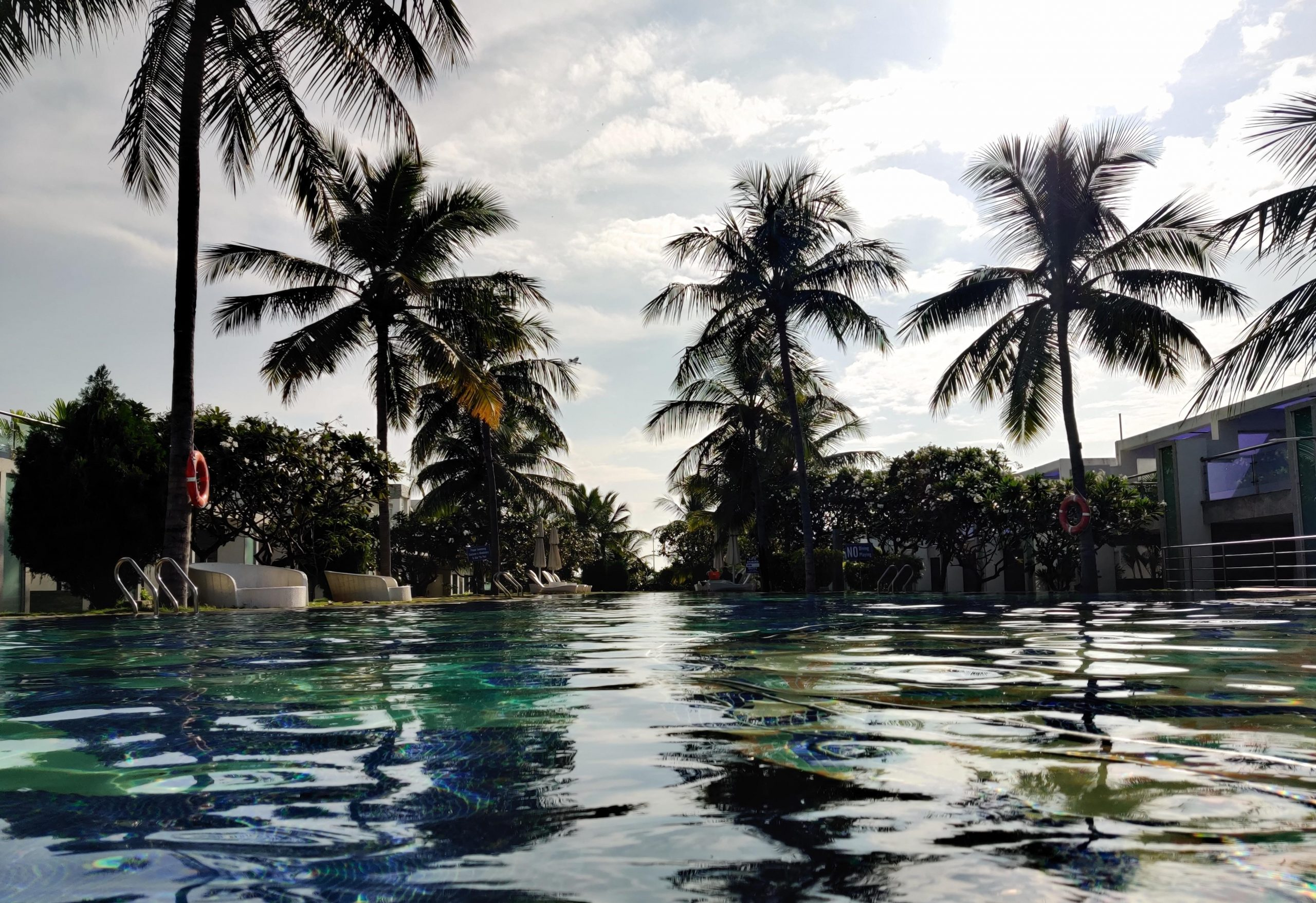 Palm trees around a swimming pool
