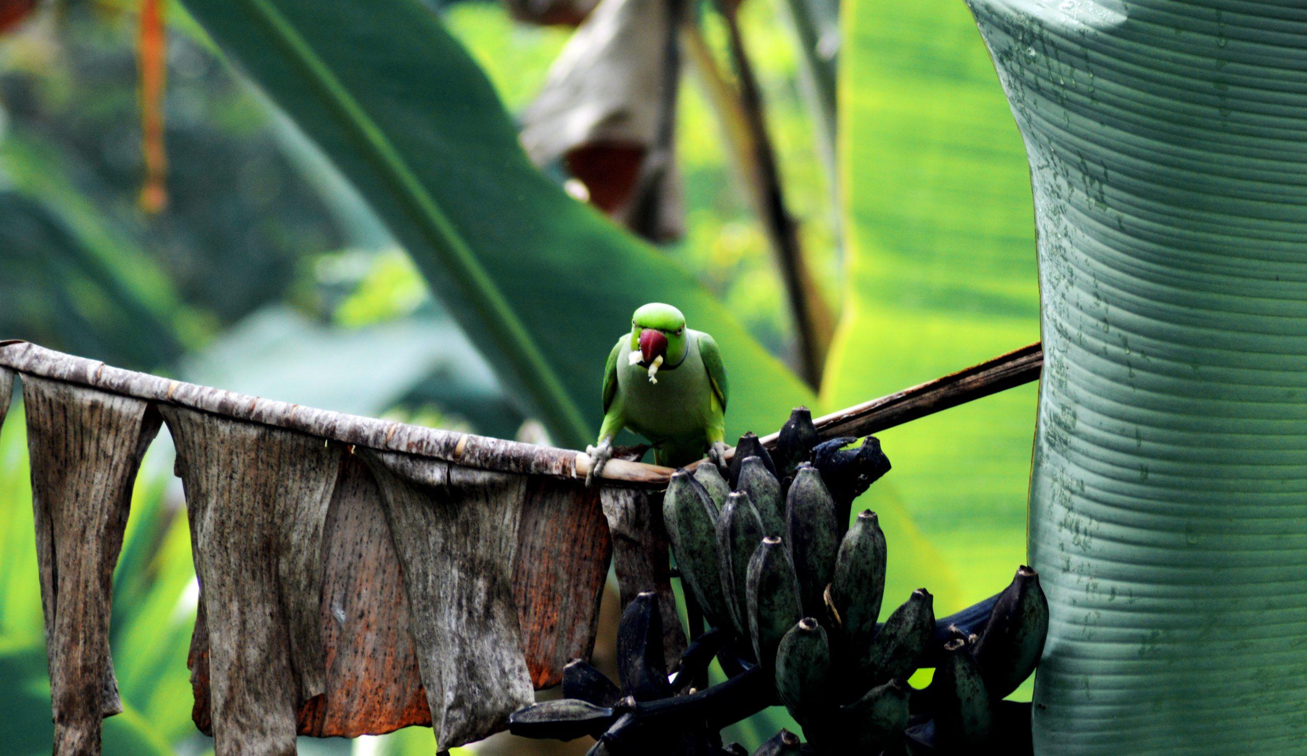 Parrot sitting on tree