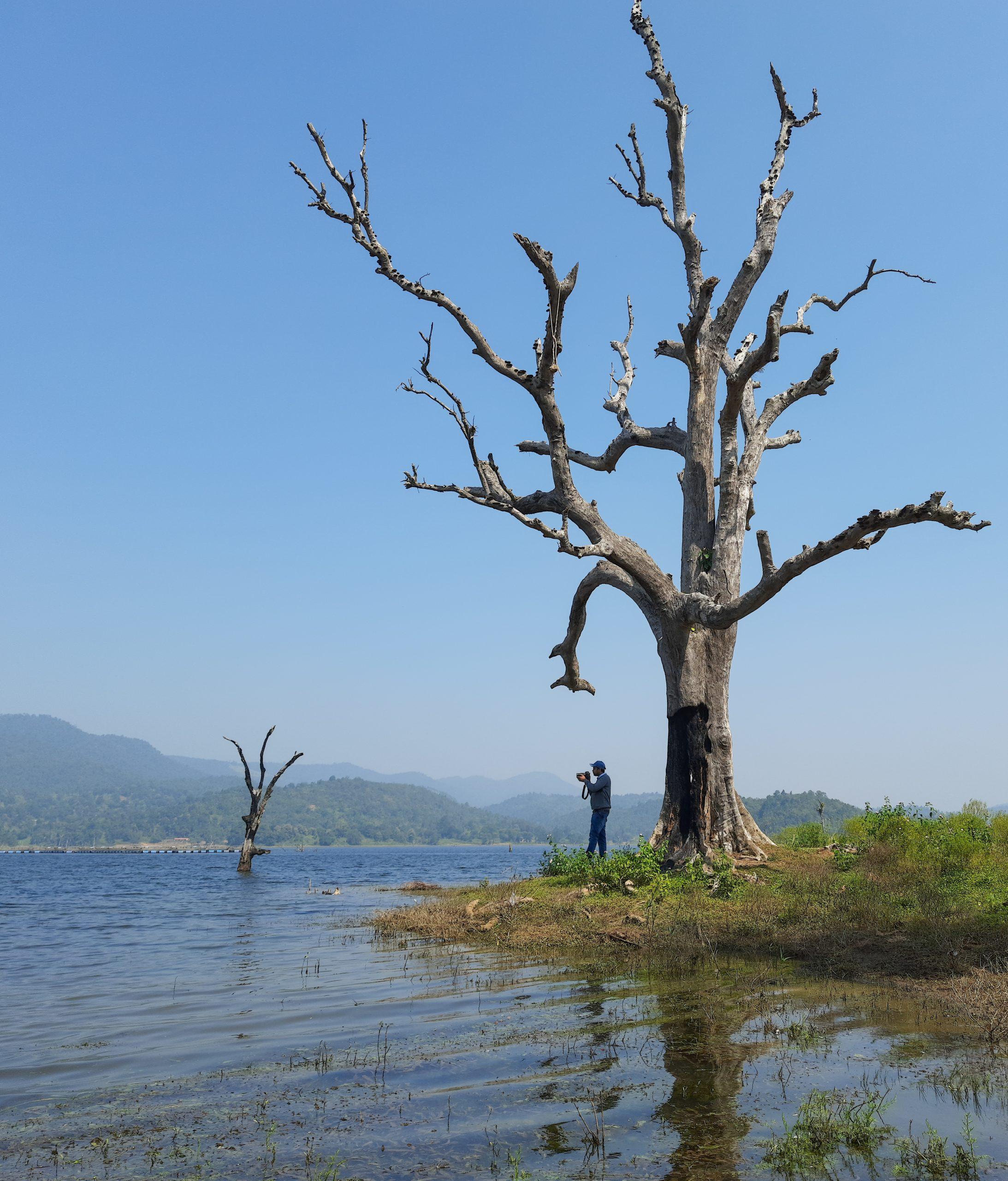 A man under dry tree