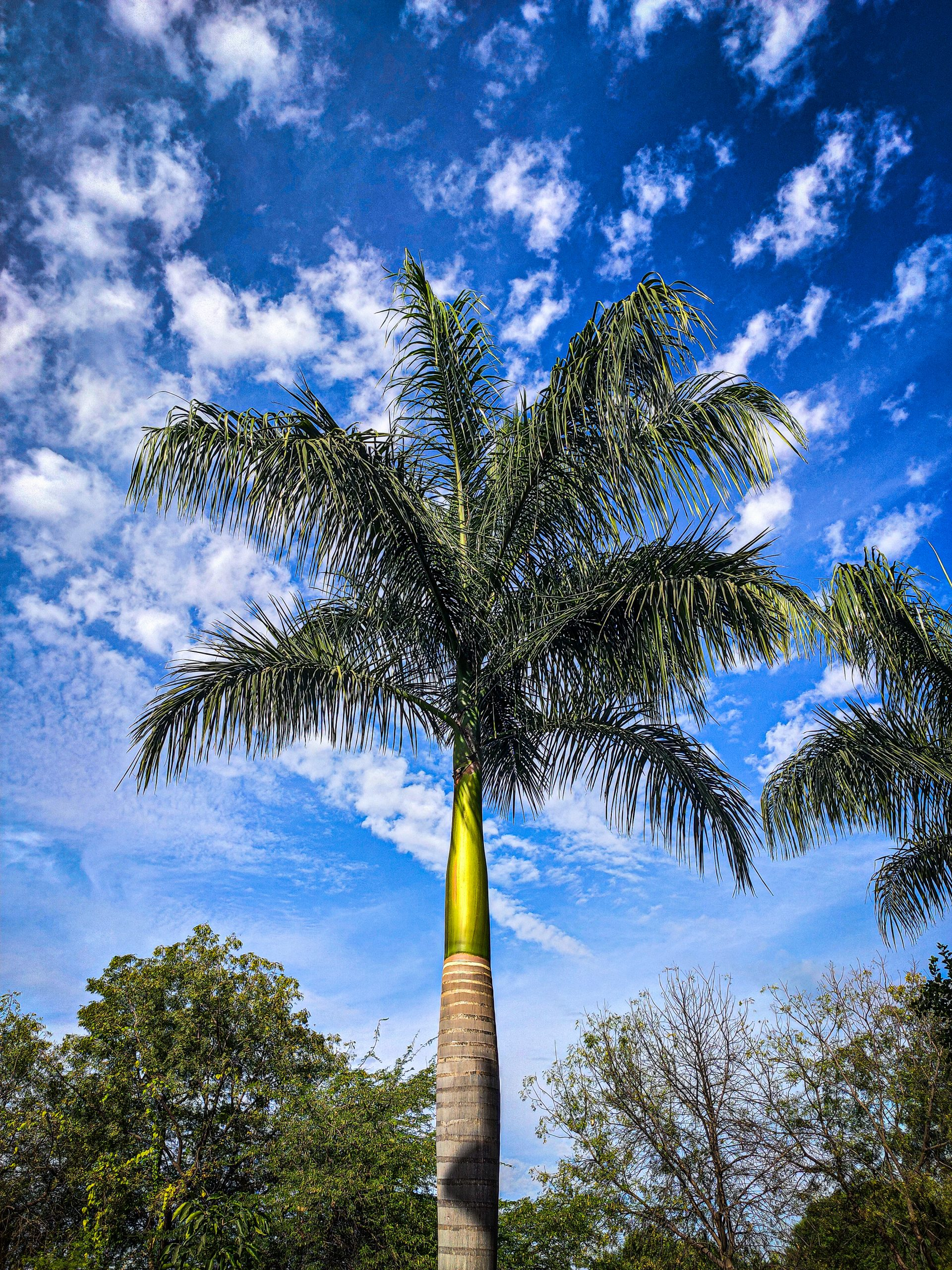 Tall Standing Palm