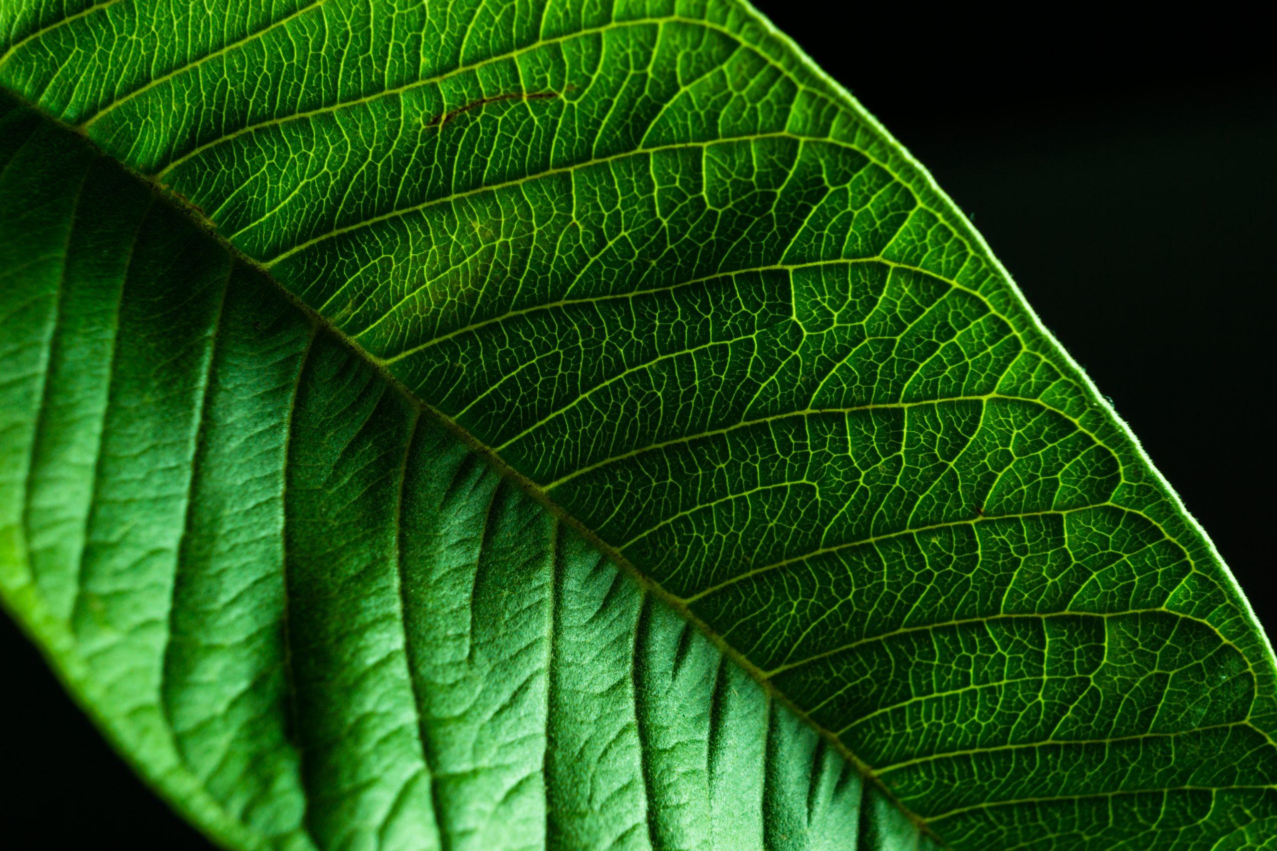 c;lose up of a leaf