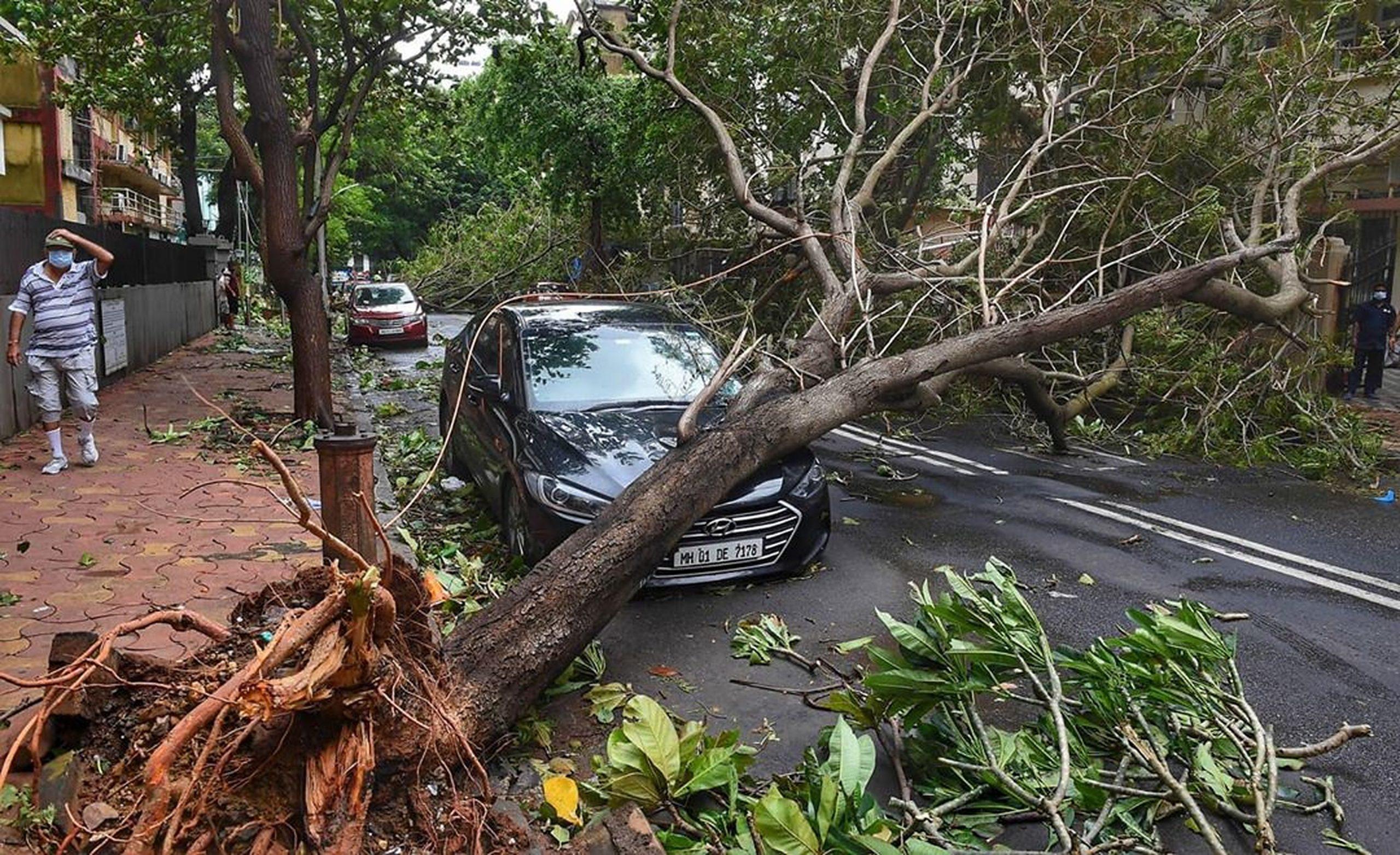tree fallen on a car