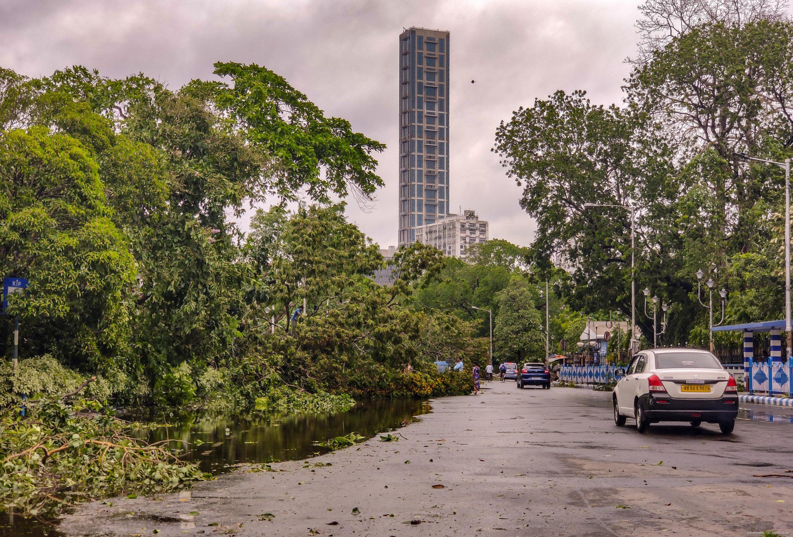 Trees fallen on road