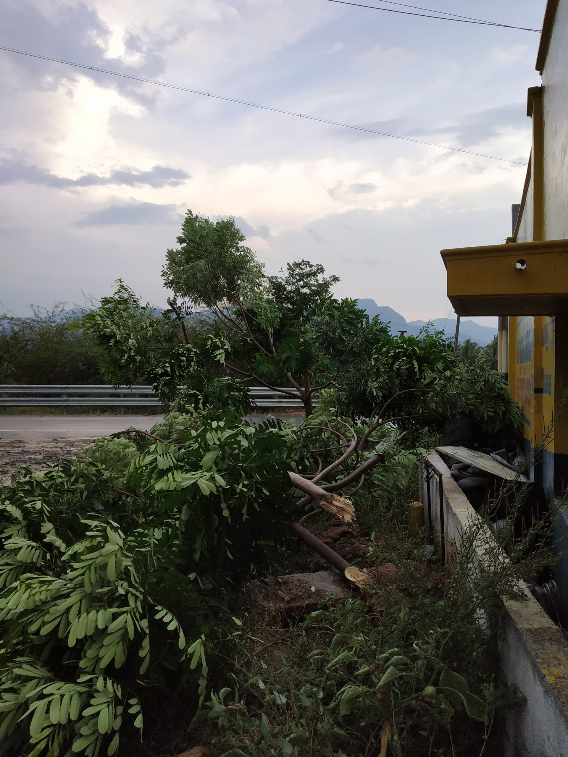 Trees uprooted due to storm