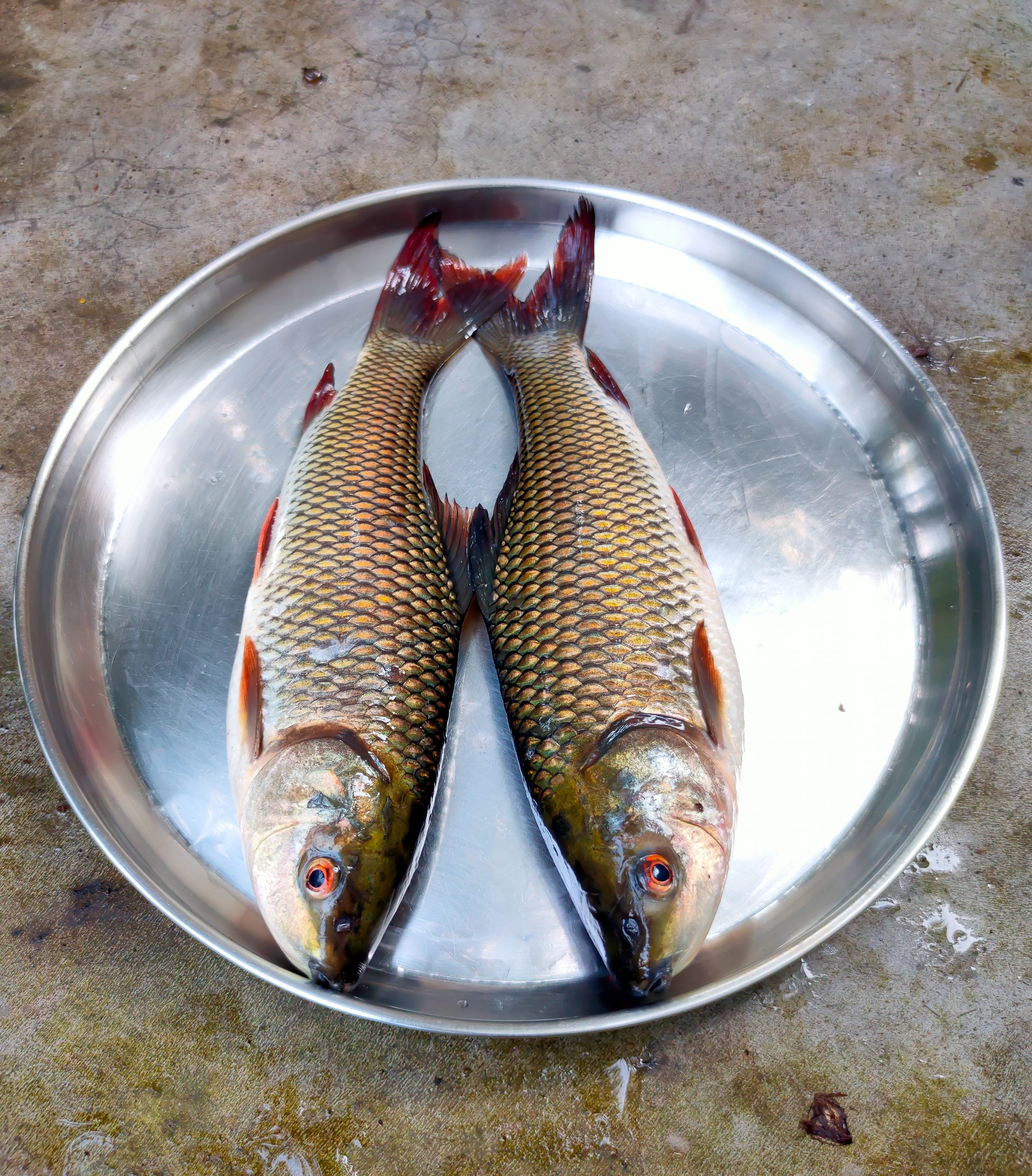 Fish in plate