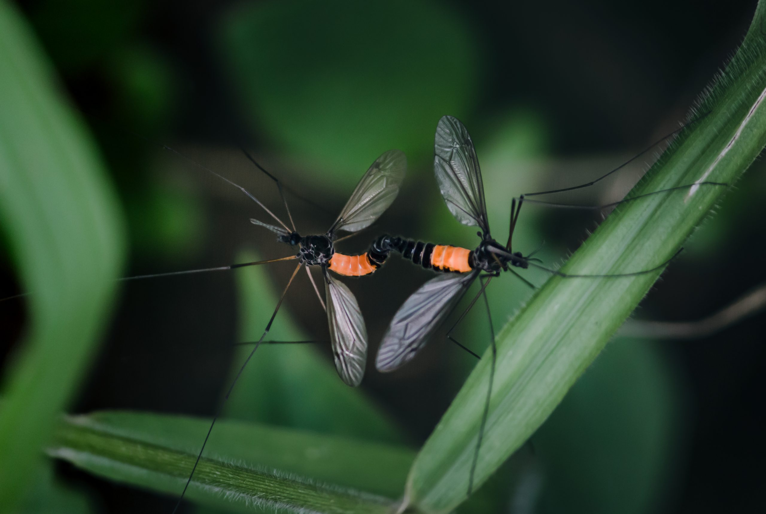 Two insects mating