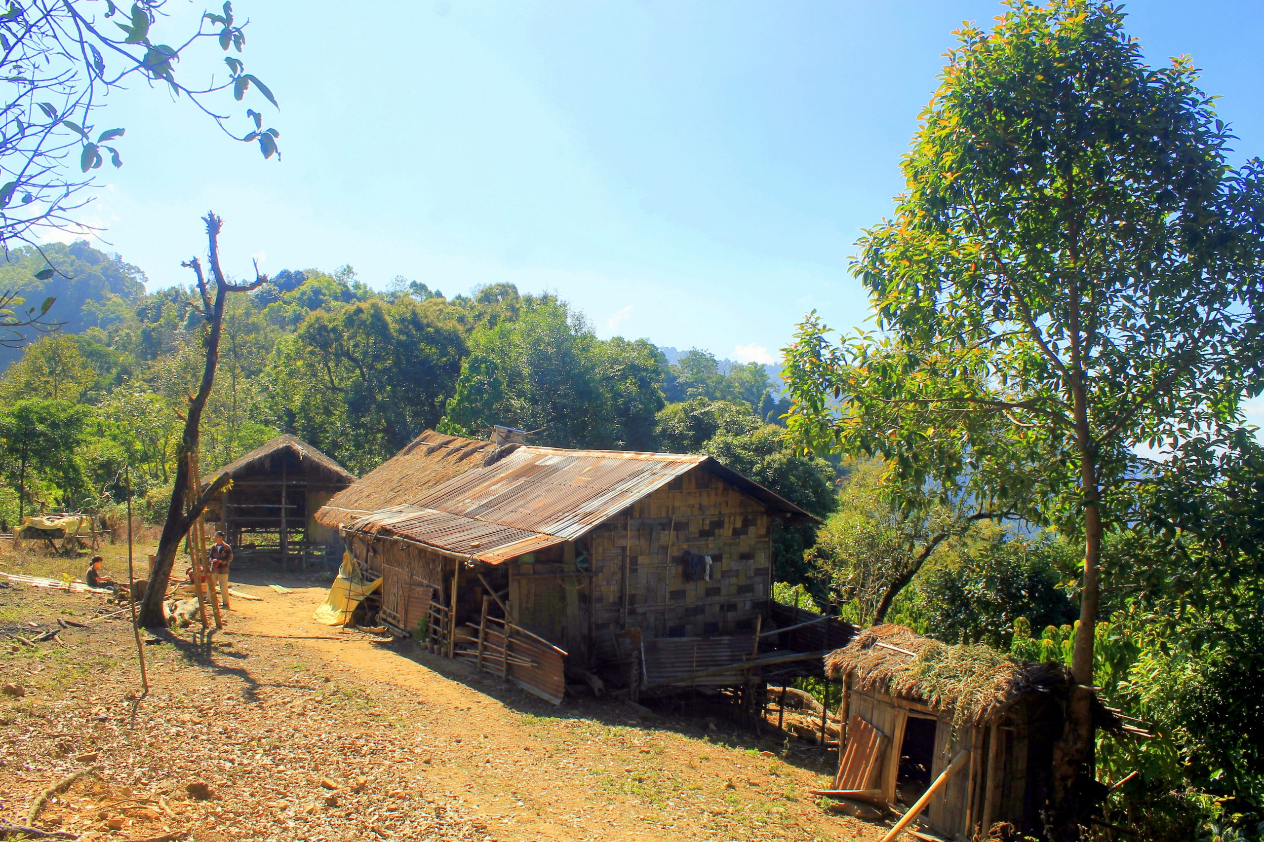 huts and trees