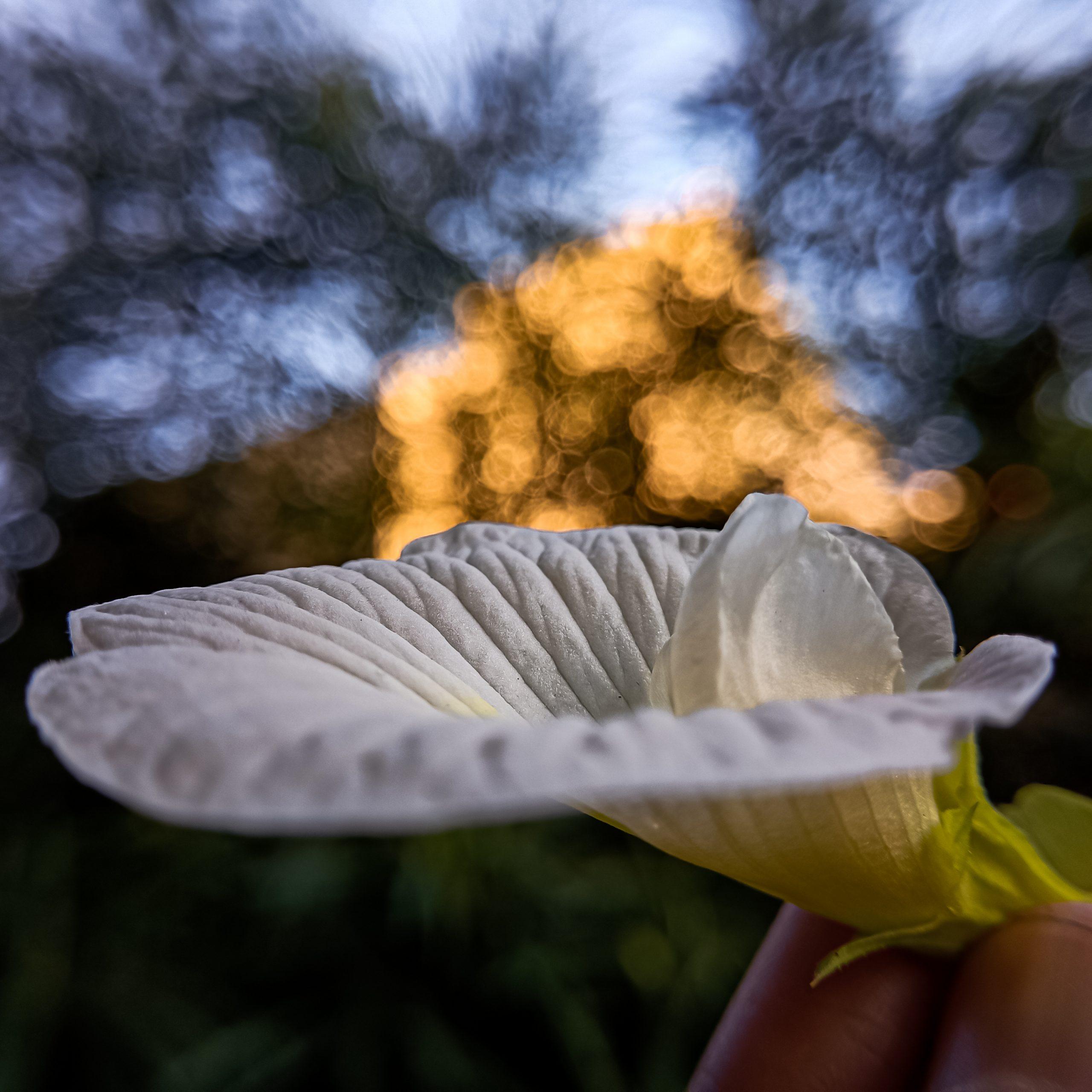 A white flower