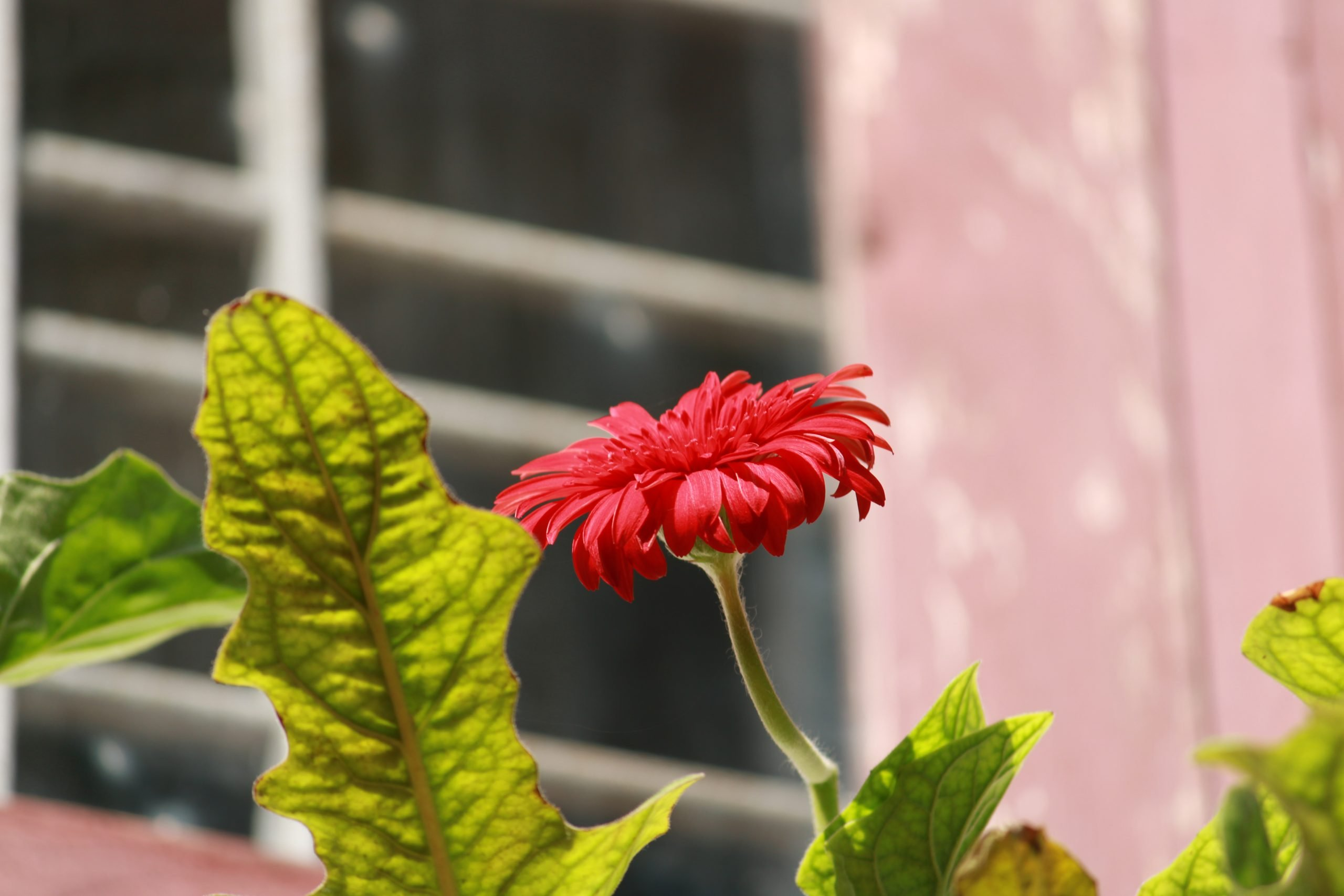 a blooming red flower