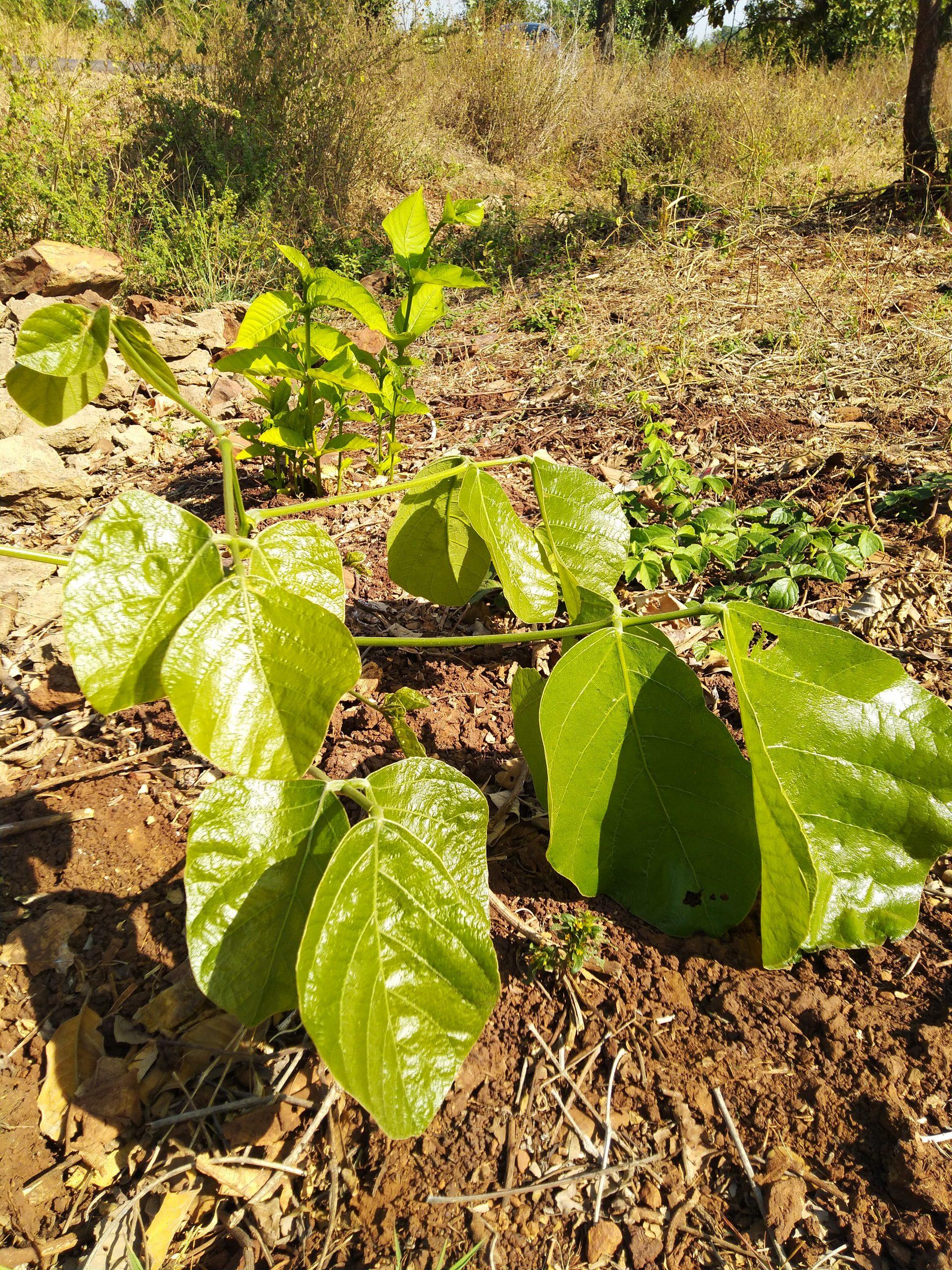 a green shrub
