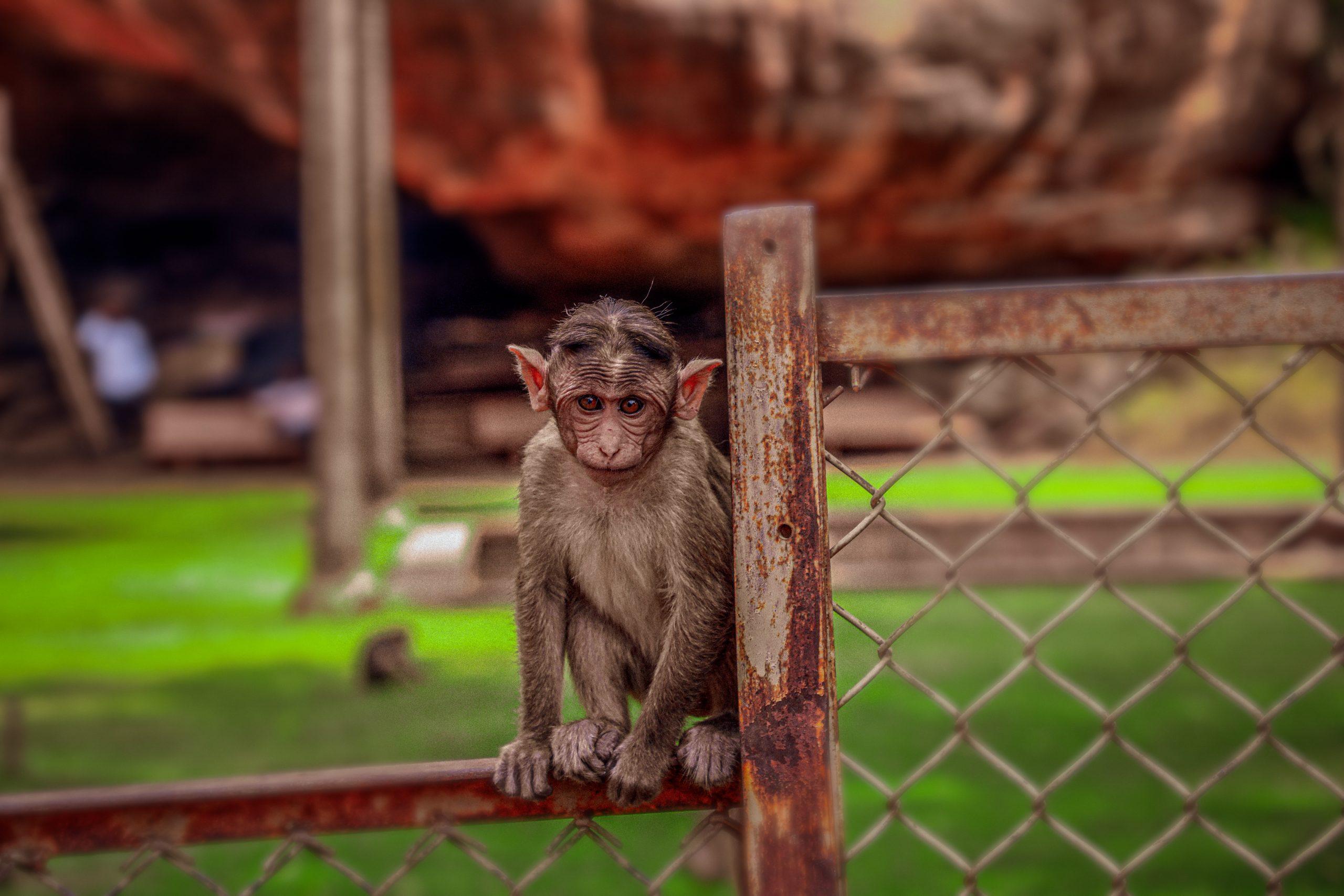 a monkey on a fence