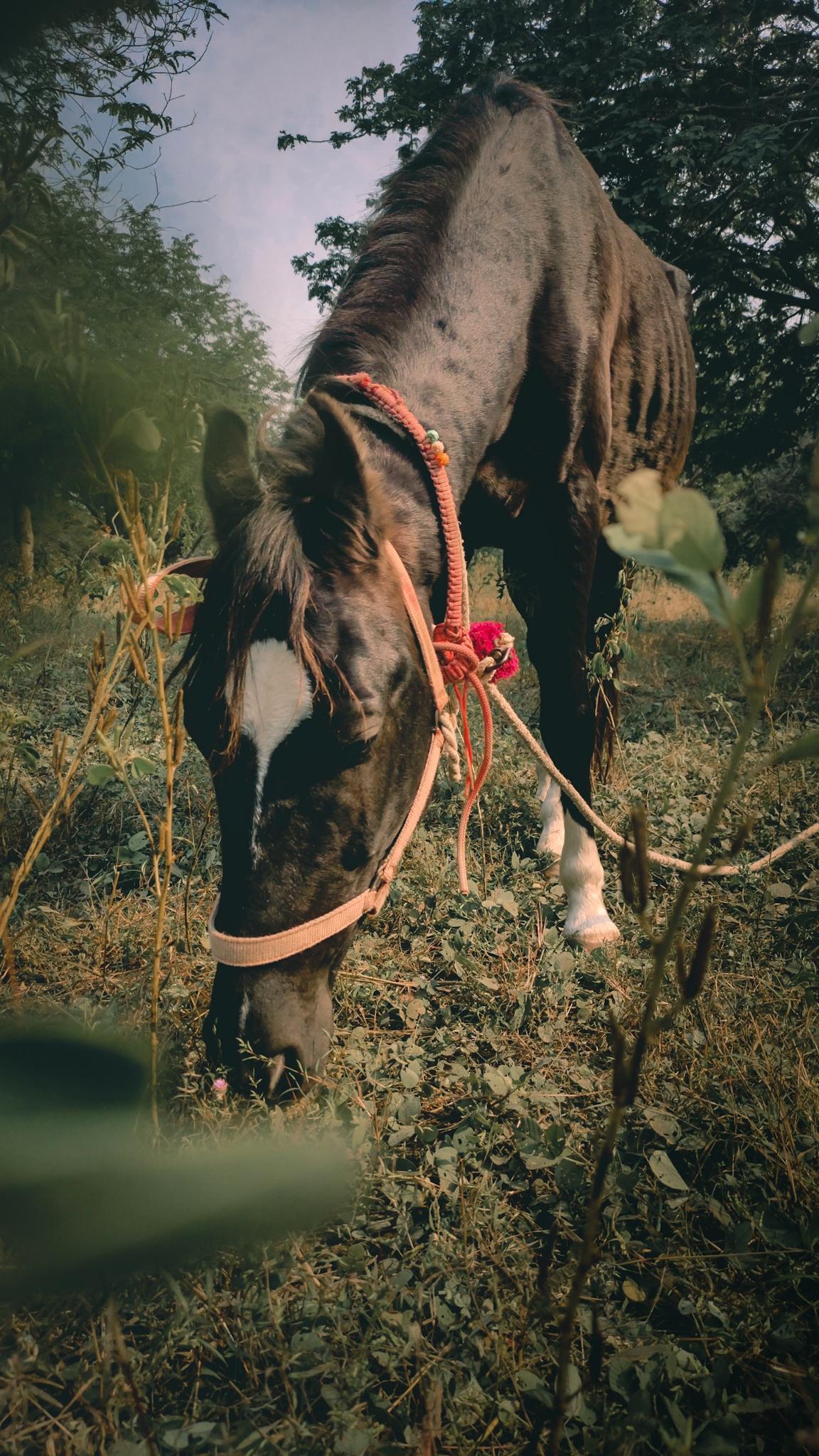 a standing horse