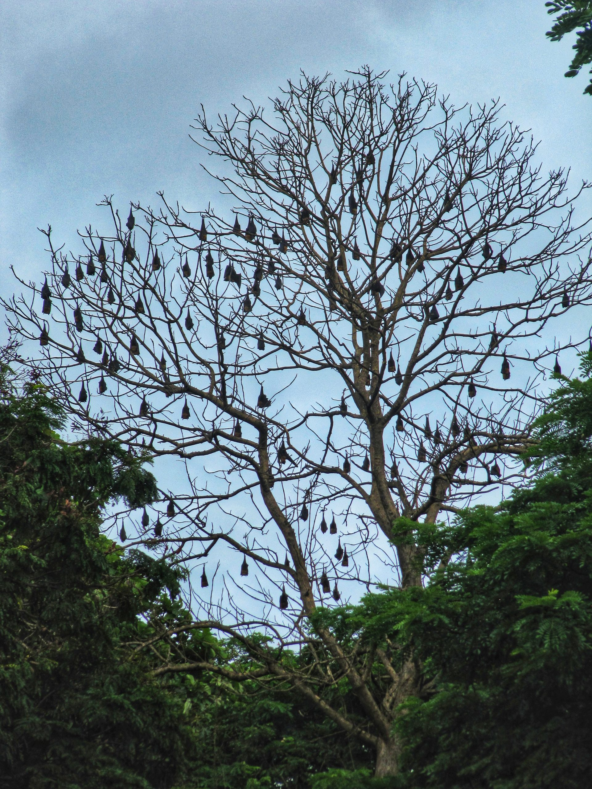 a tree with nests