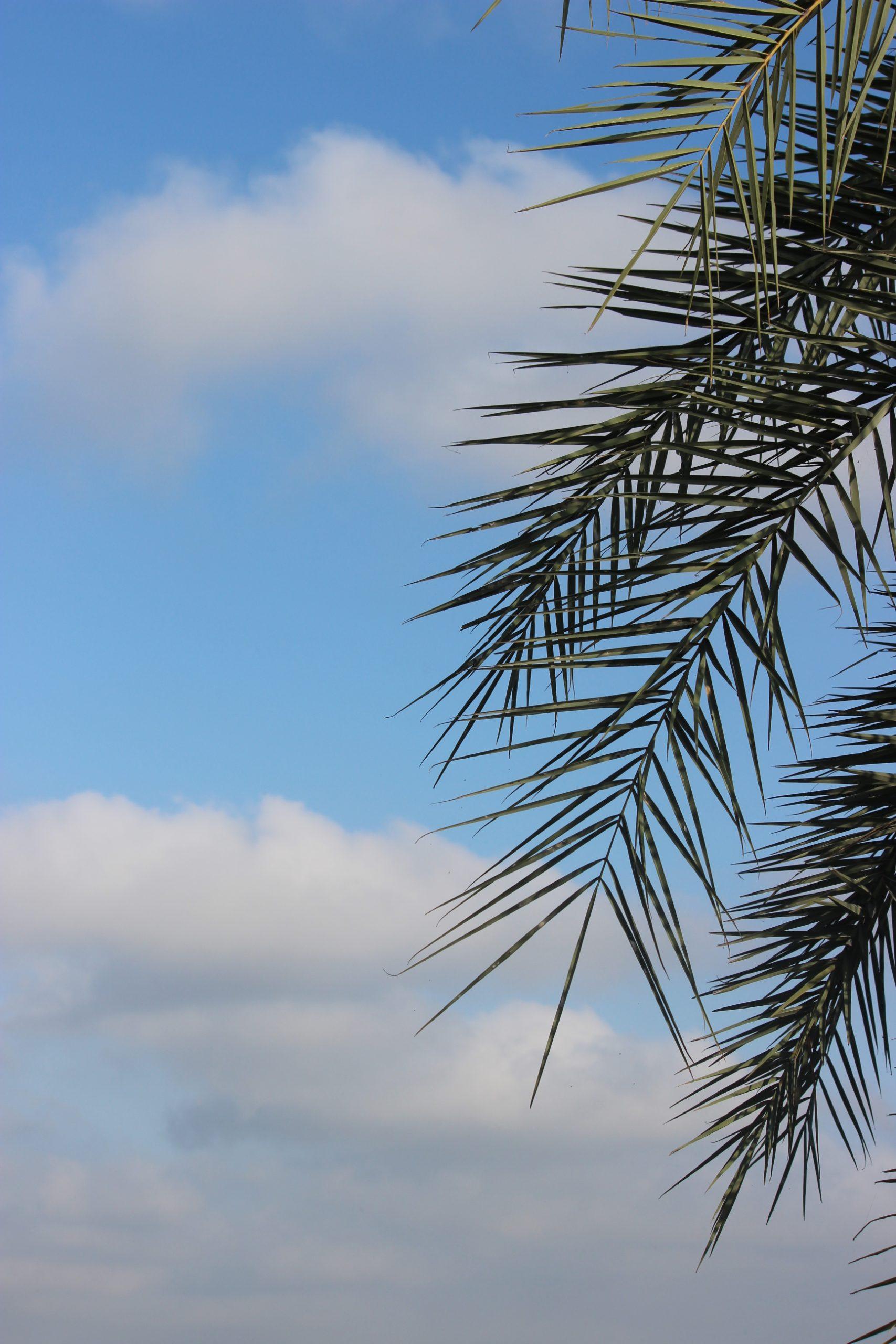 tree leaves against sky
