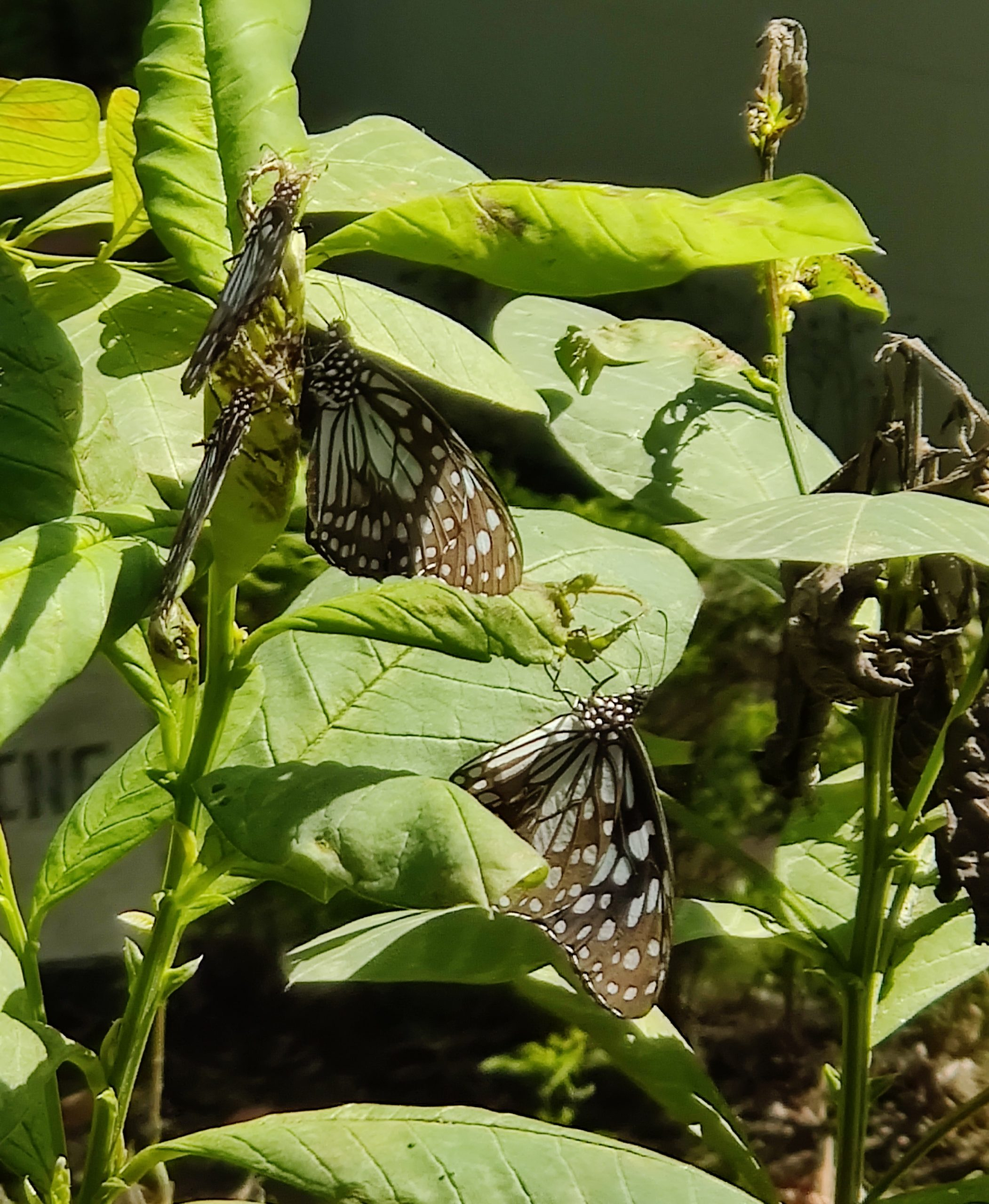 butterflies on leaf