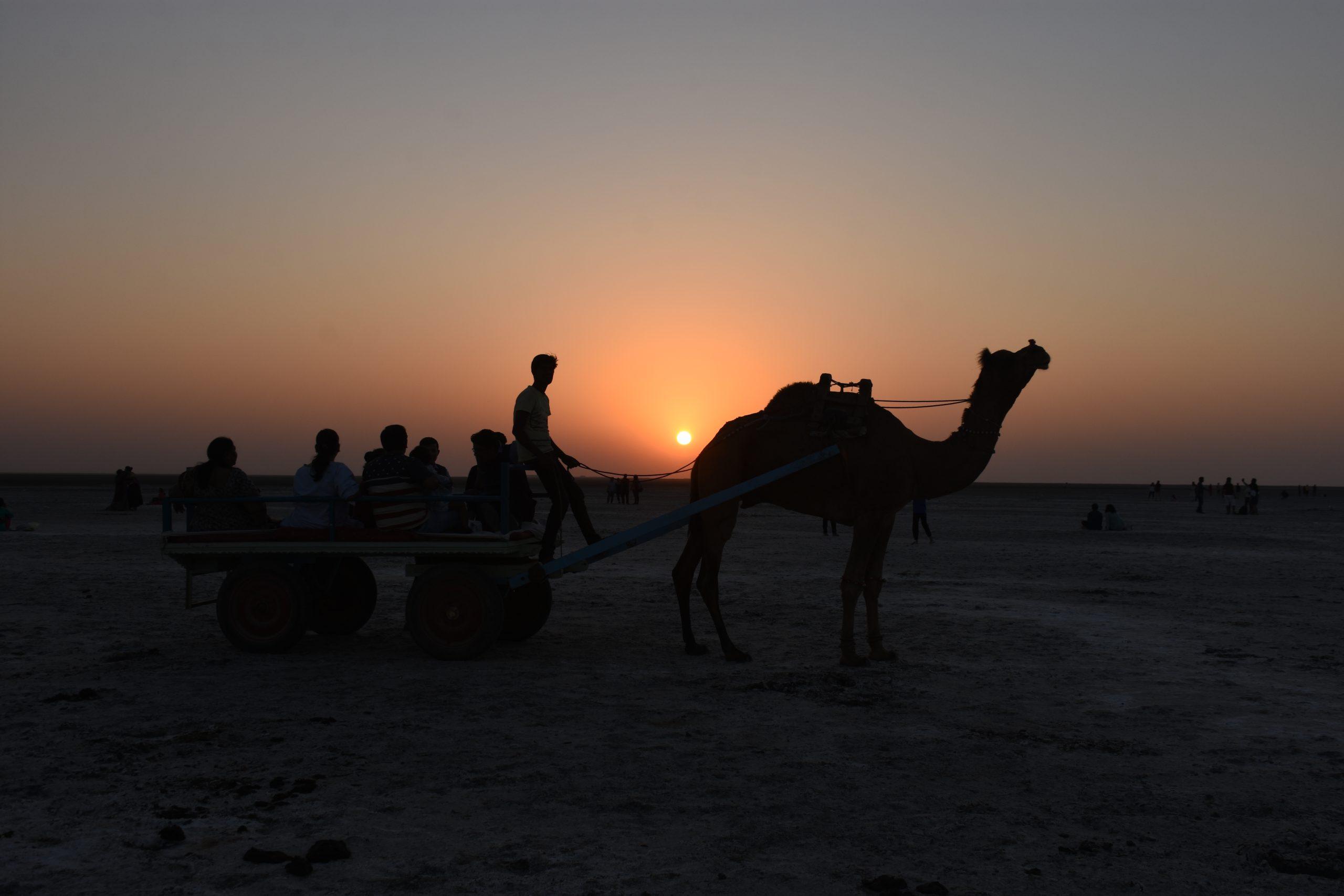 camel cart and sunset