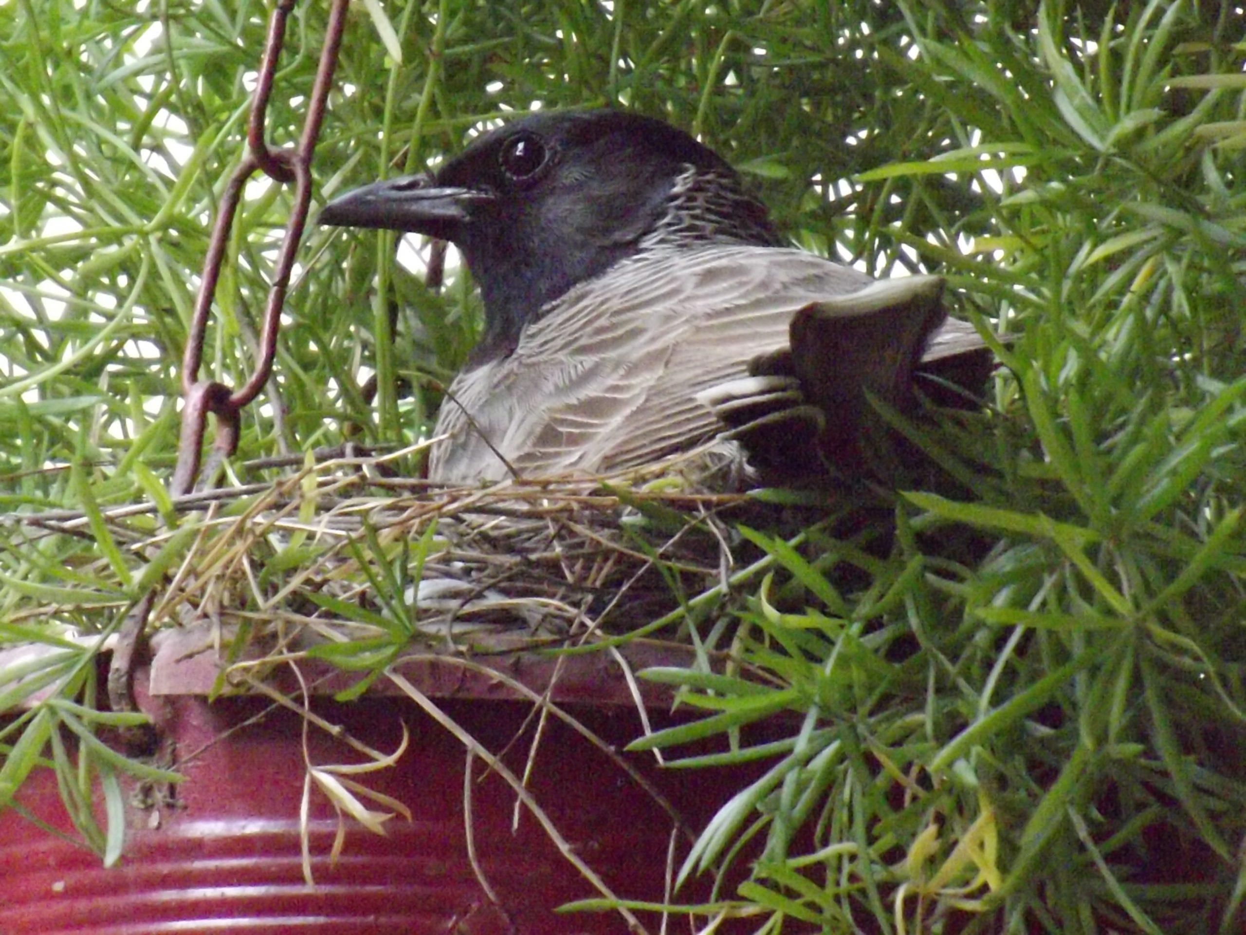 A bird in nest