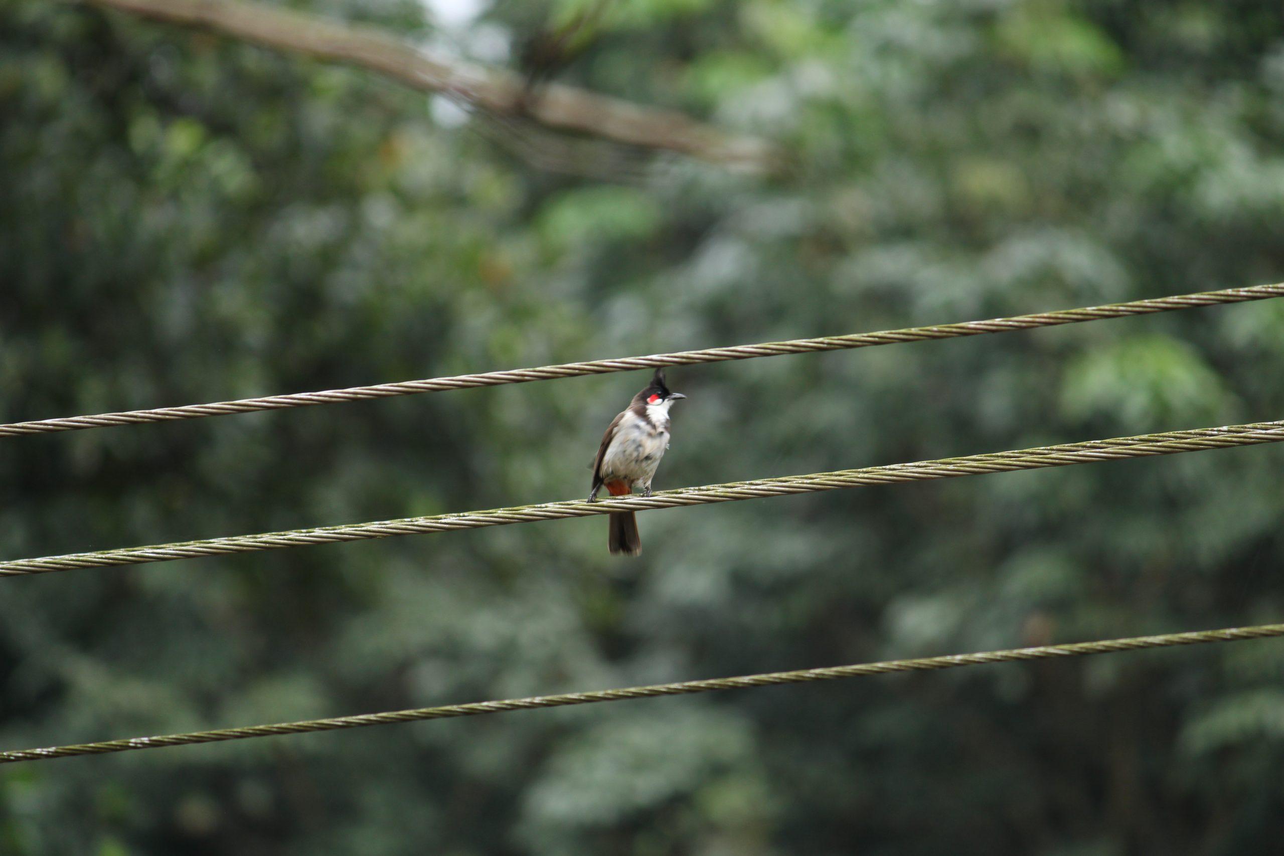 A bird on an electric line