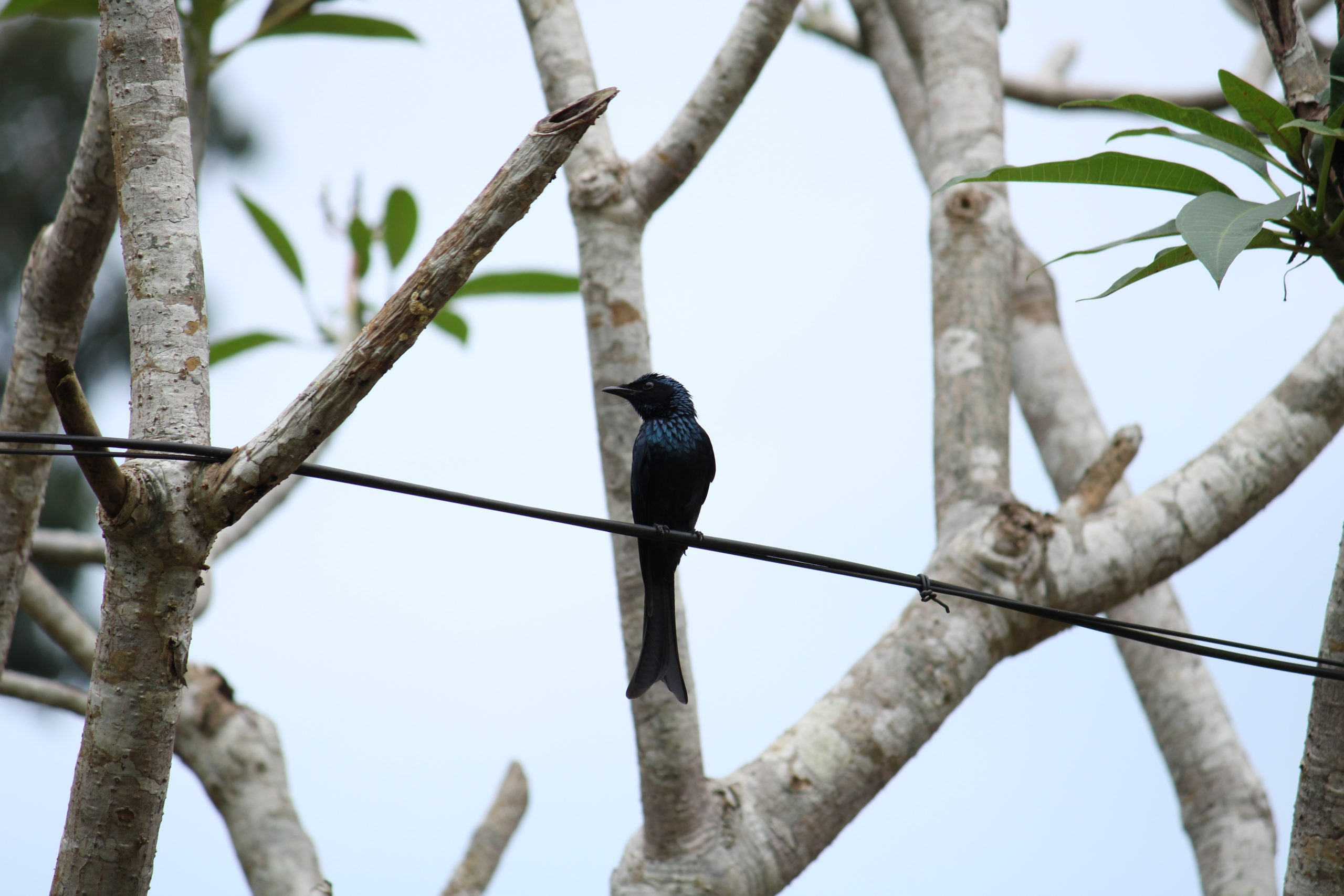 A bird sitting on an electric line