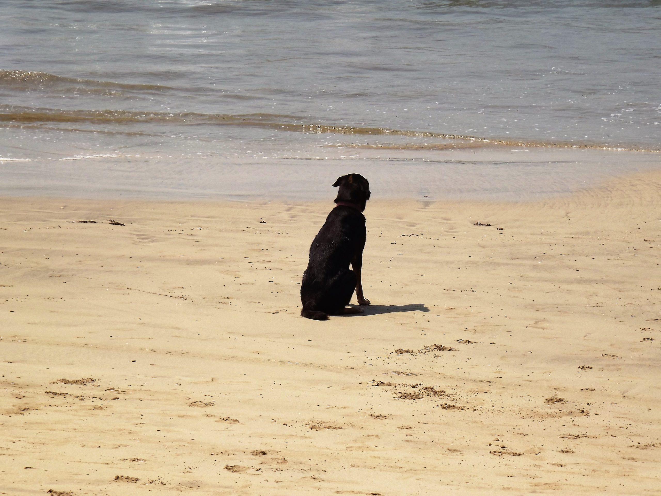 A black dog on a beach