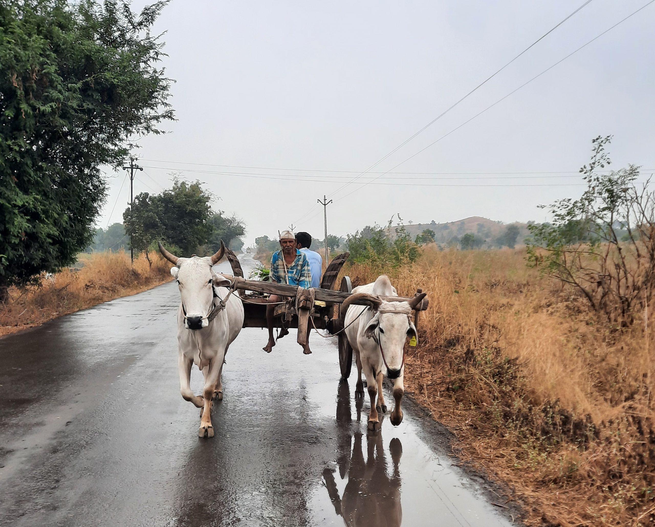 A bullock cart