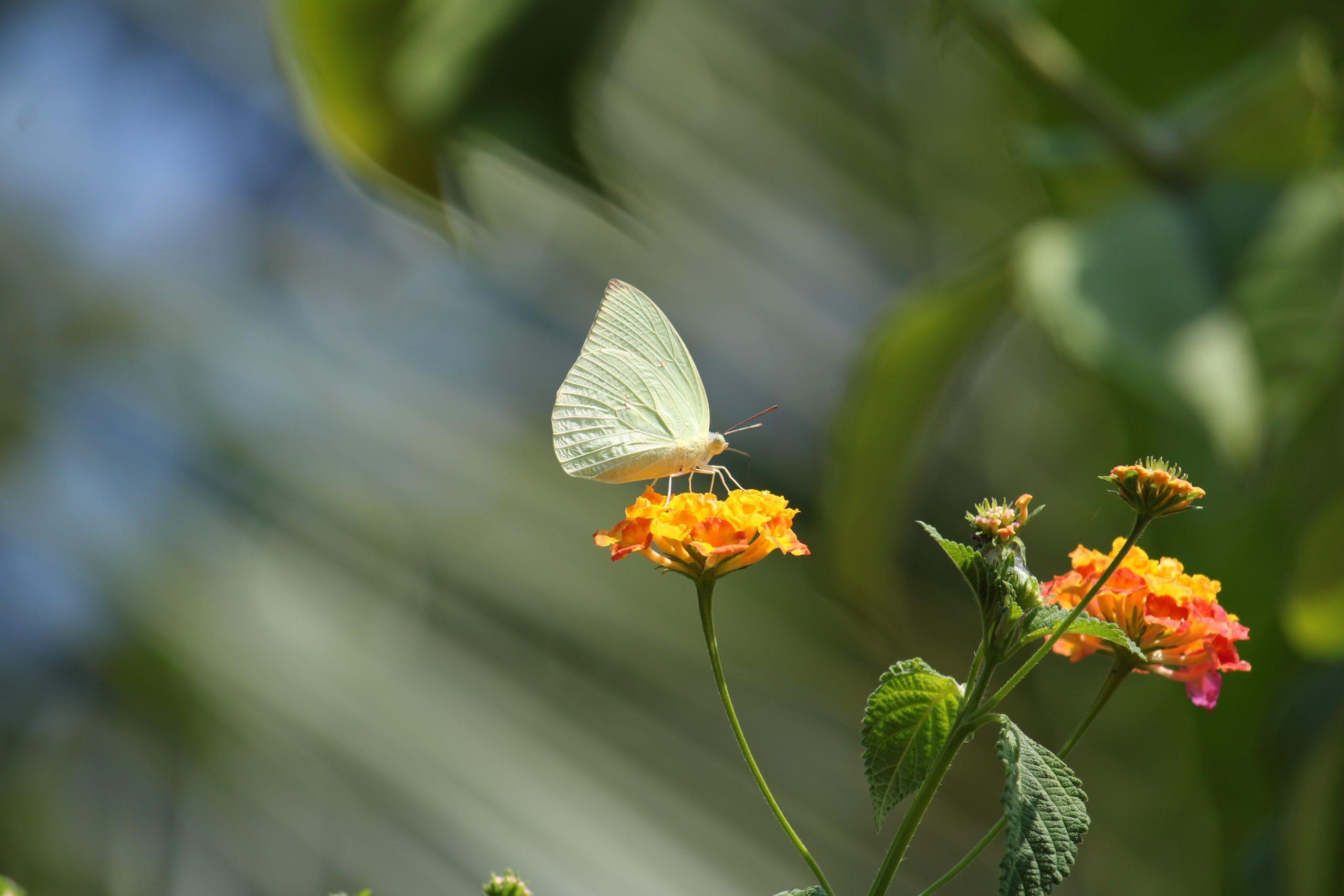A butterfly on a flower