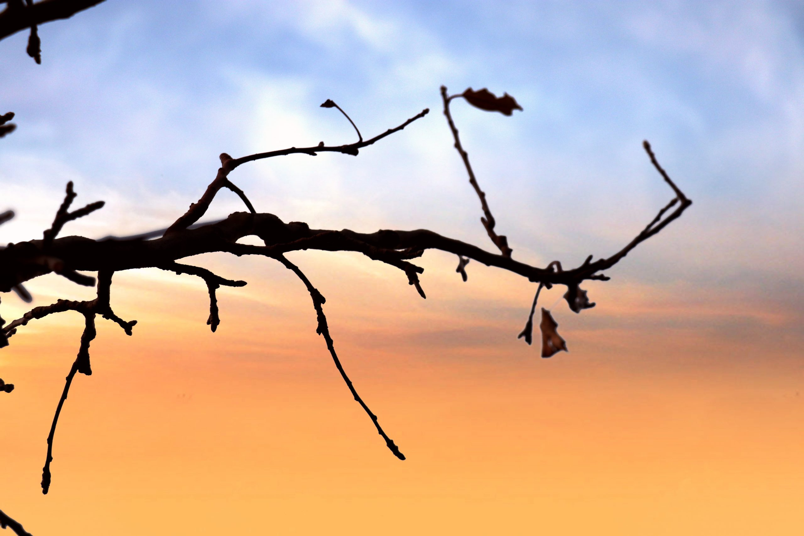A dry branch