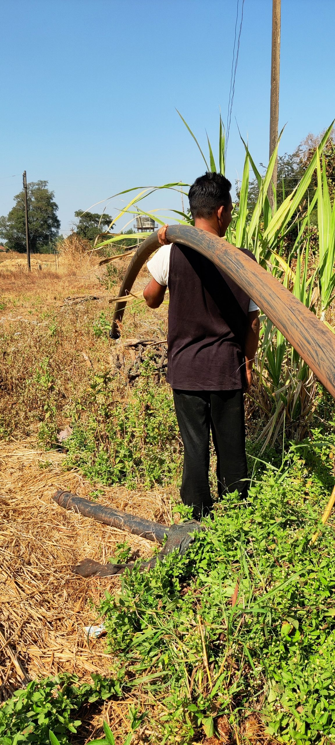 A farmer carrying irrigation pipes